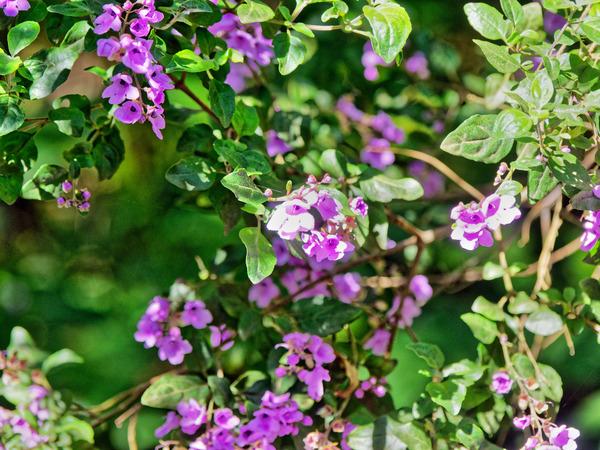 Wildflowers-3.jpeg