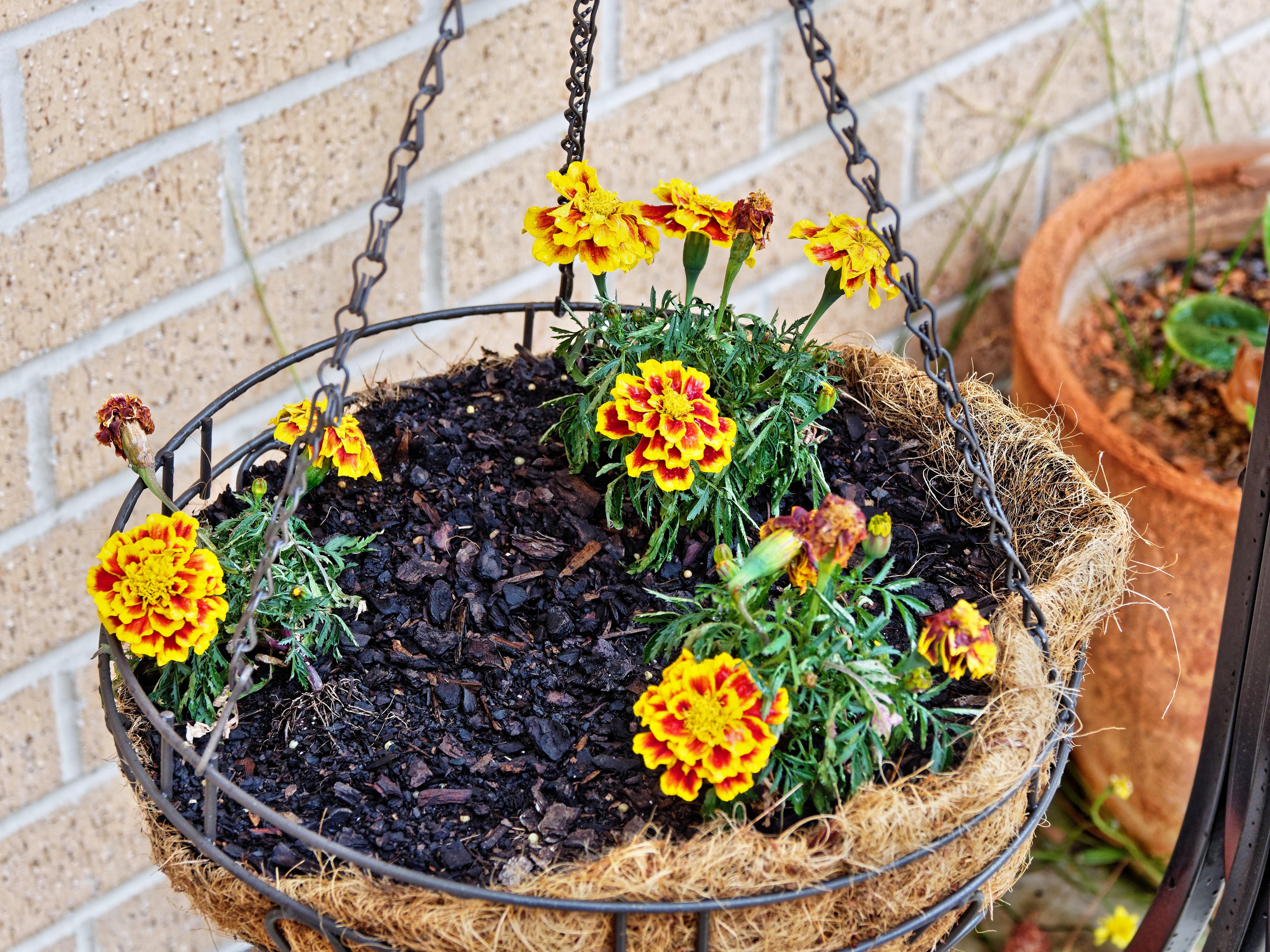 Flower-baskets-3.jpeg