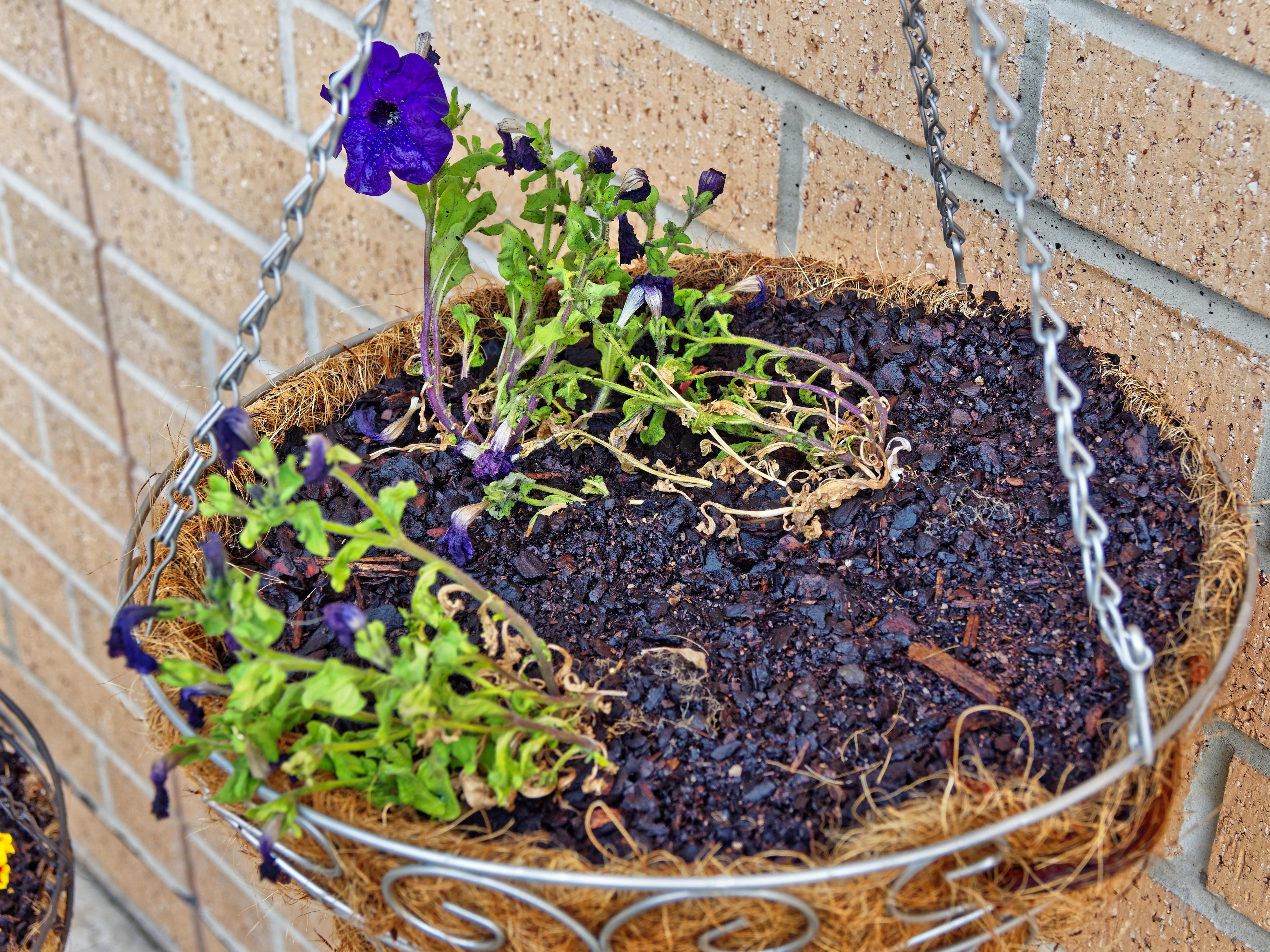 Flower-baskets-7.jpeg