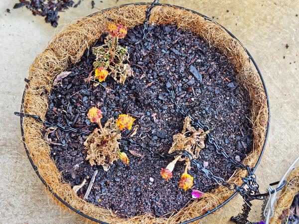 Flower-baskets-2.jpeg