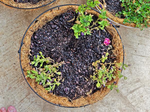 Flower-baskets-4.jpeg