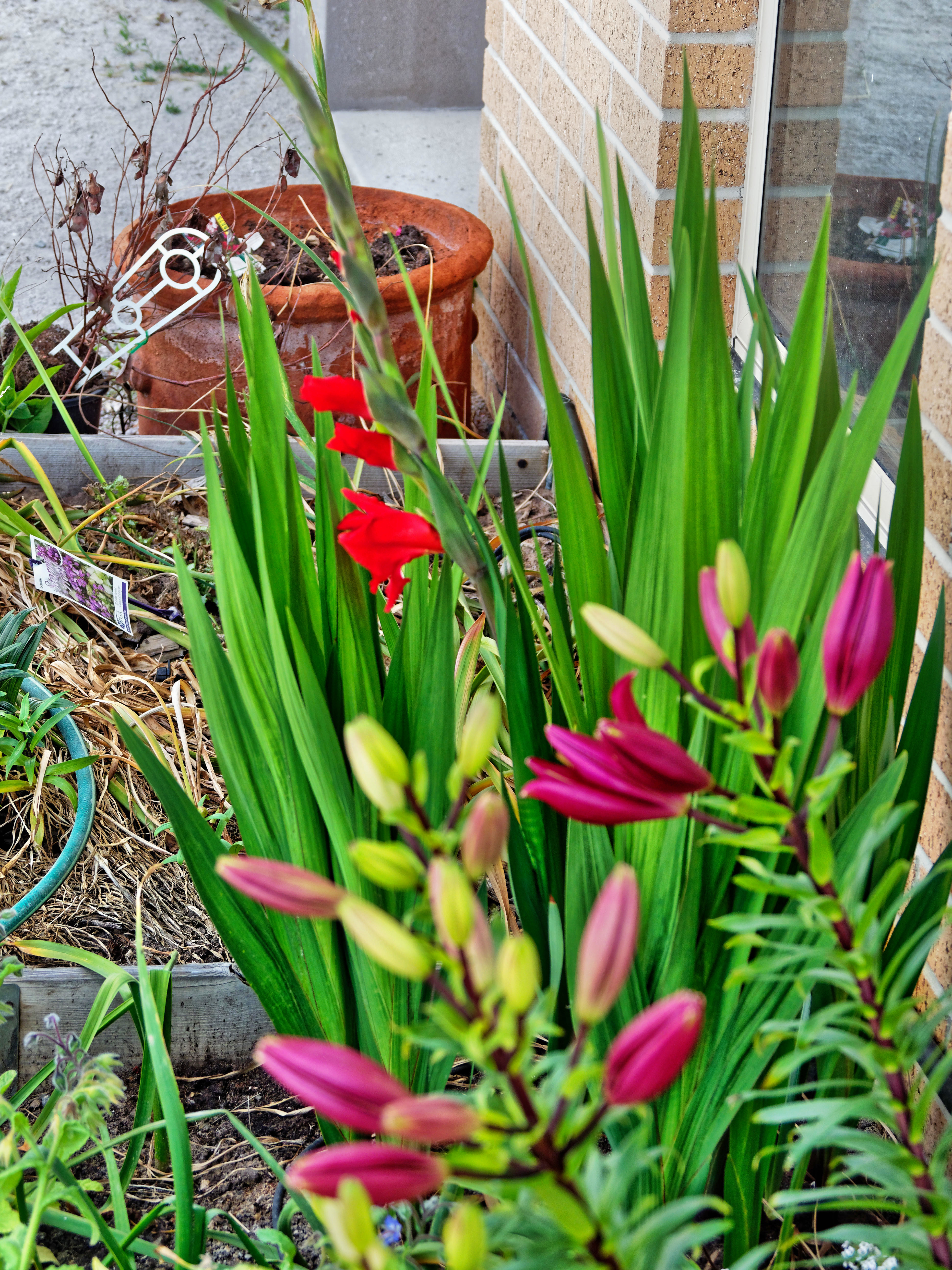 Lilies-gladiolus-1.jpeg