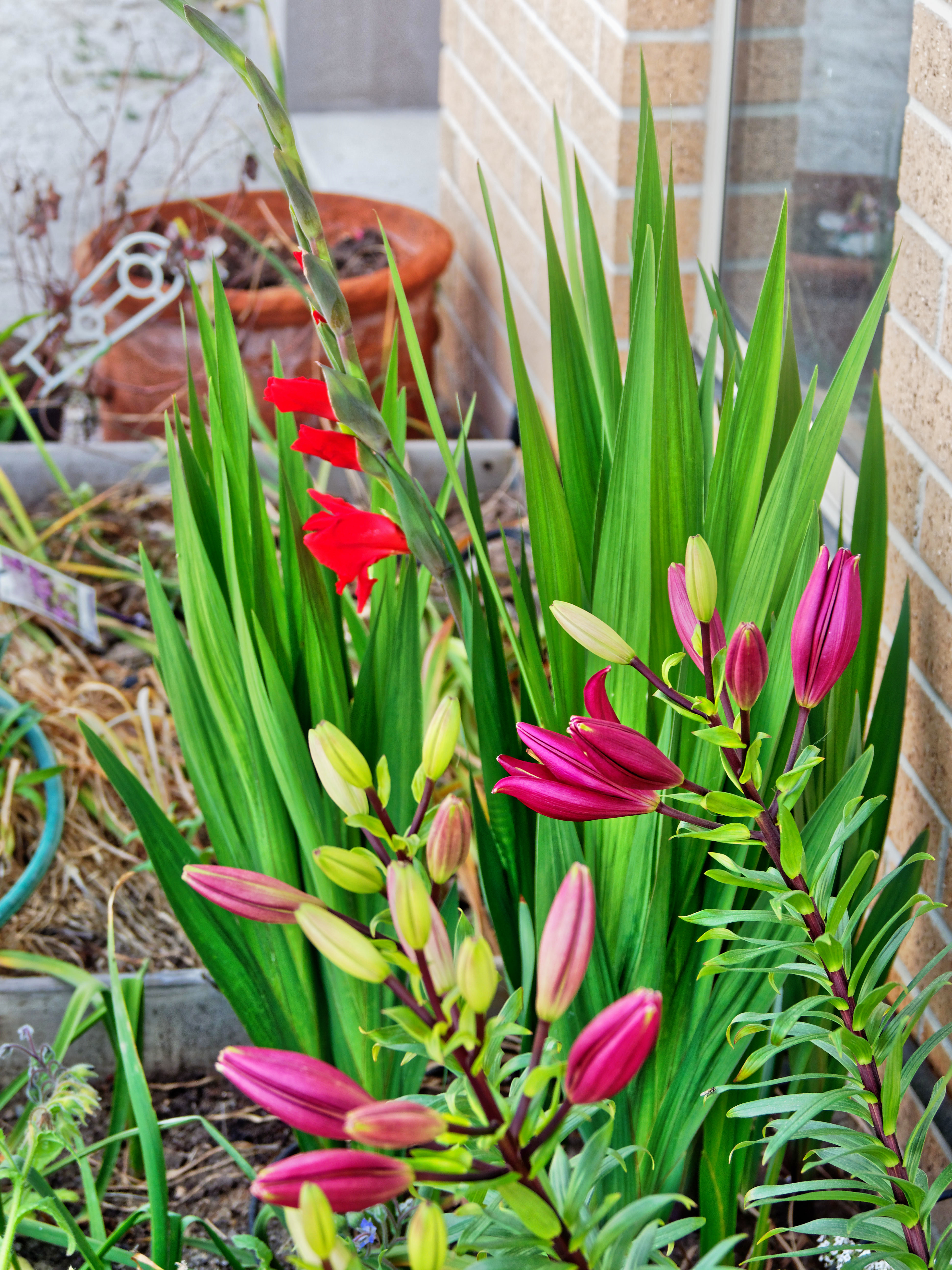 This should be Lilies-gladiolus-2.jpeg.  Is it missing?