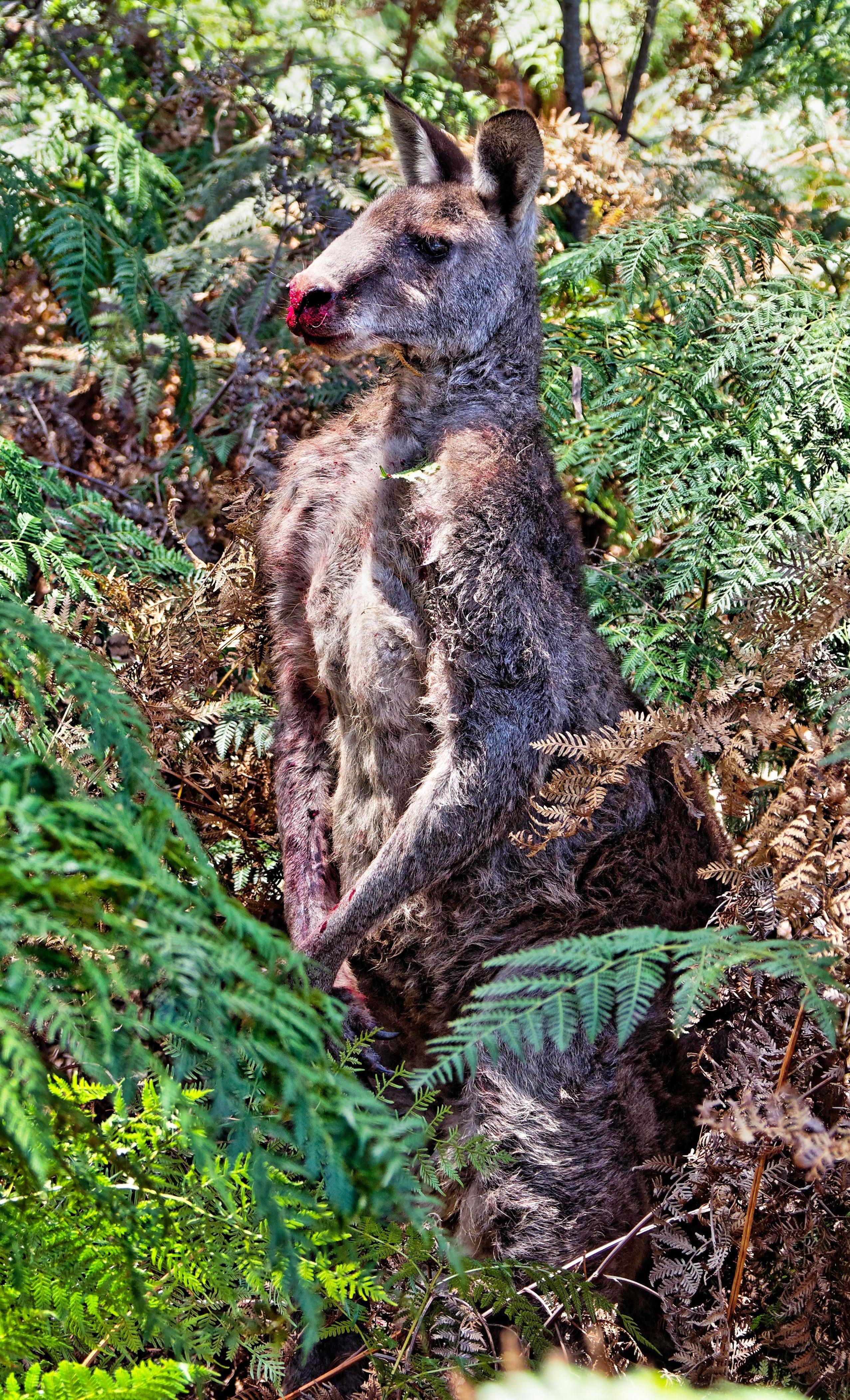 Kangaroo-1-detail.jpeg