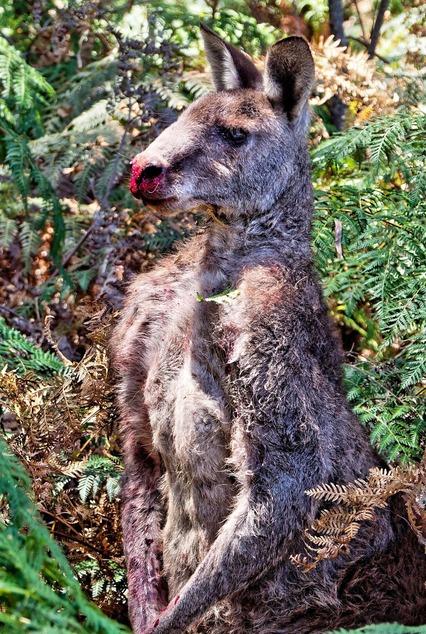Kangaroo-1-detail-2.jpeg