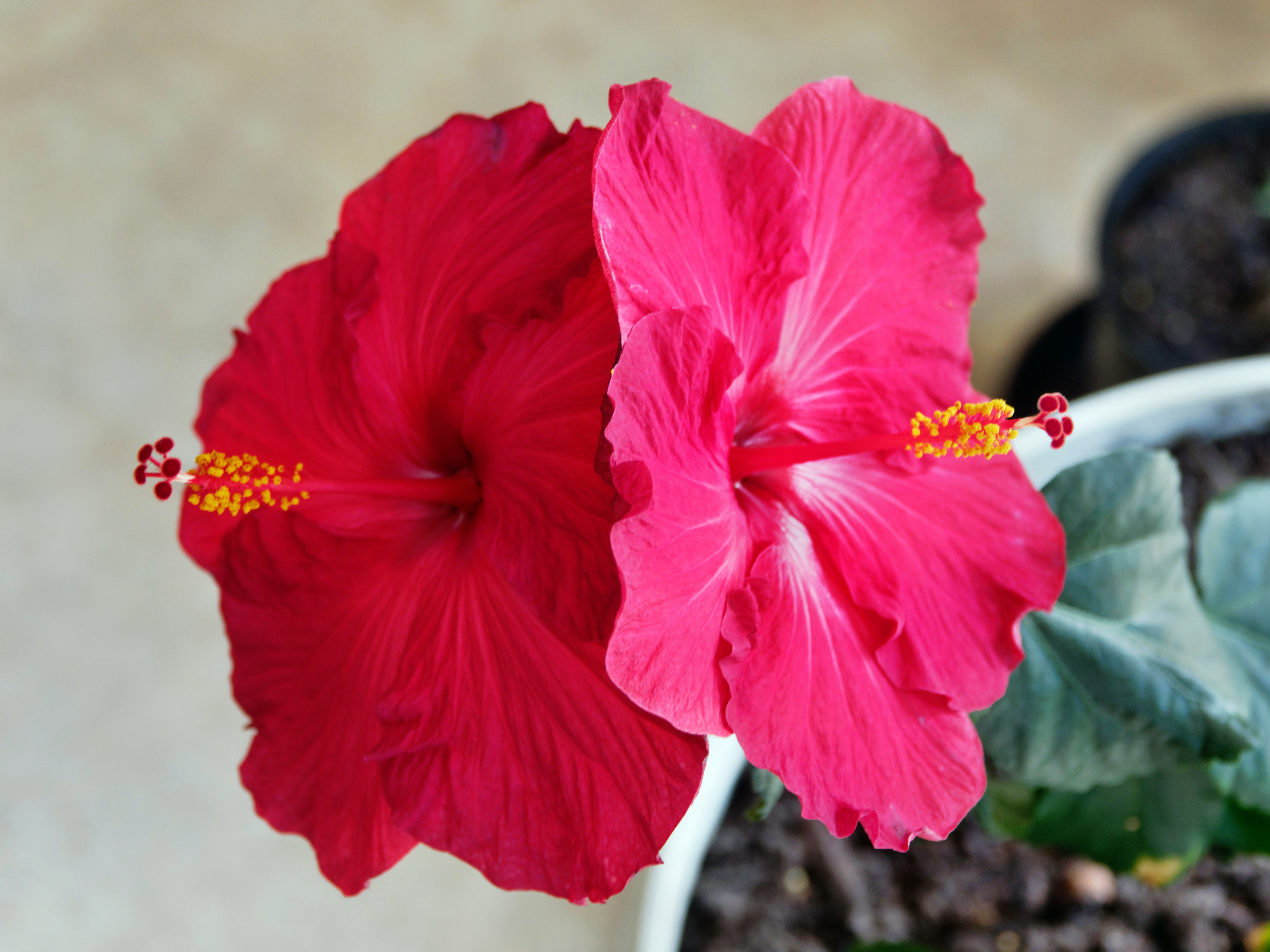 This should be Hibiscus-3.jpeg.  Is it missing?