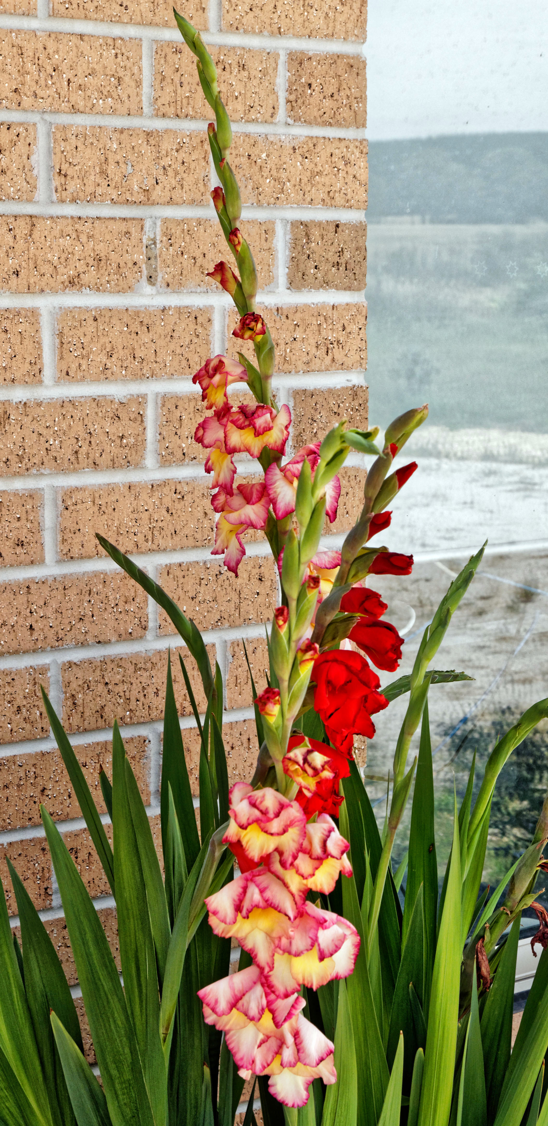 This should be Gladioli.jpeg.  Is it missing?