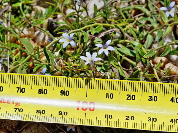 Tiny-flowers-2.jpeg