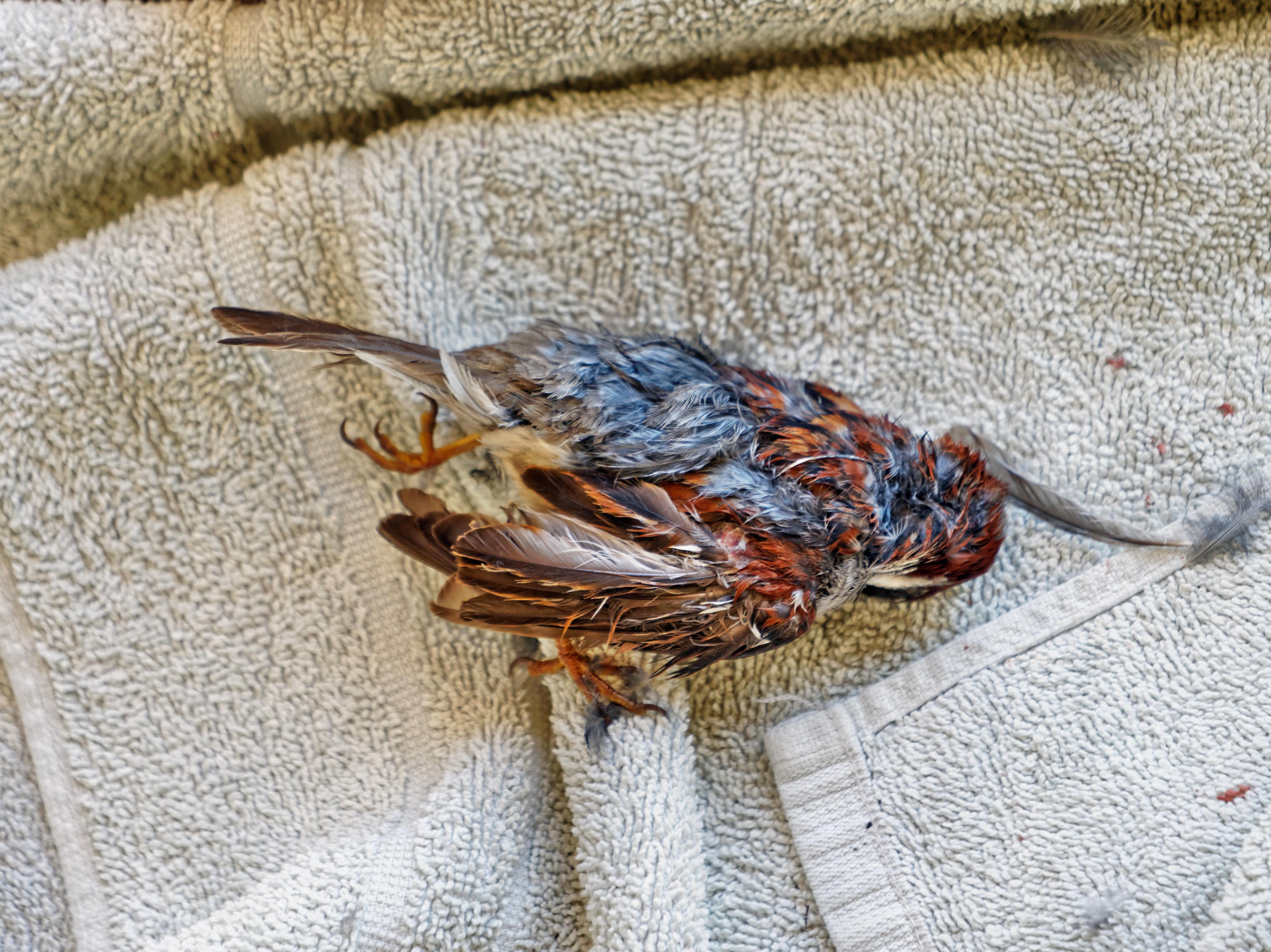 Sparrow-2.jpeg