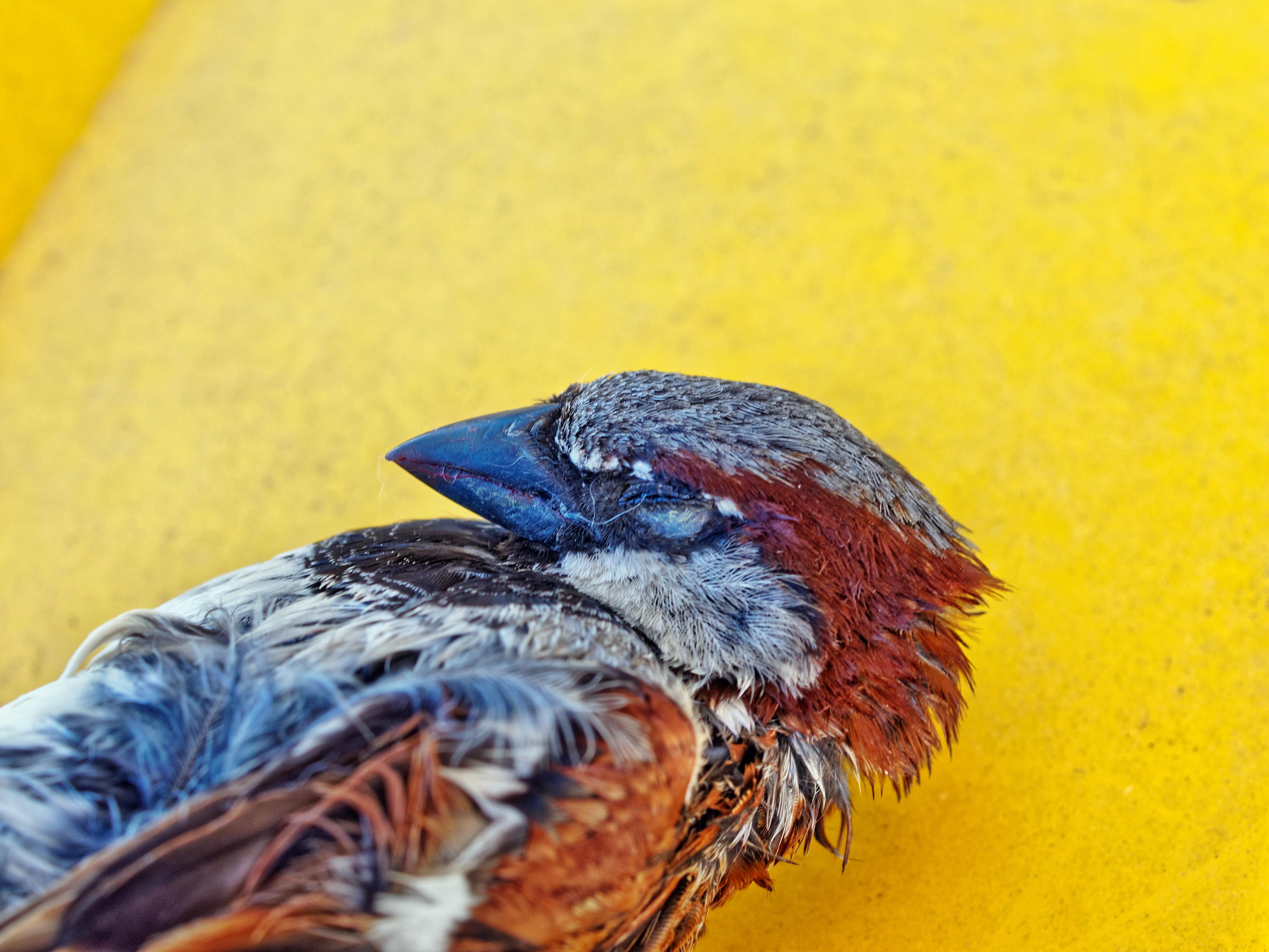 Sparrow-4.jpeg
