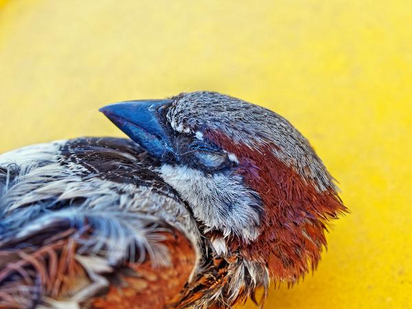 Sparrow-5.jpeg