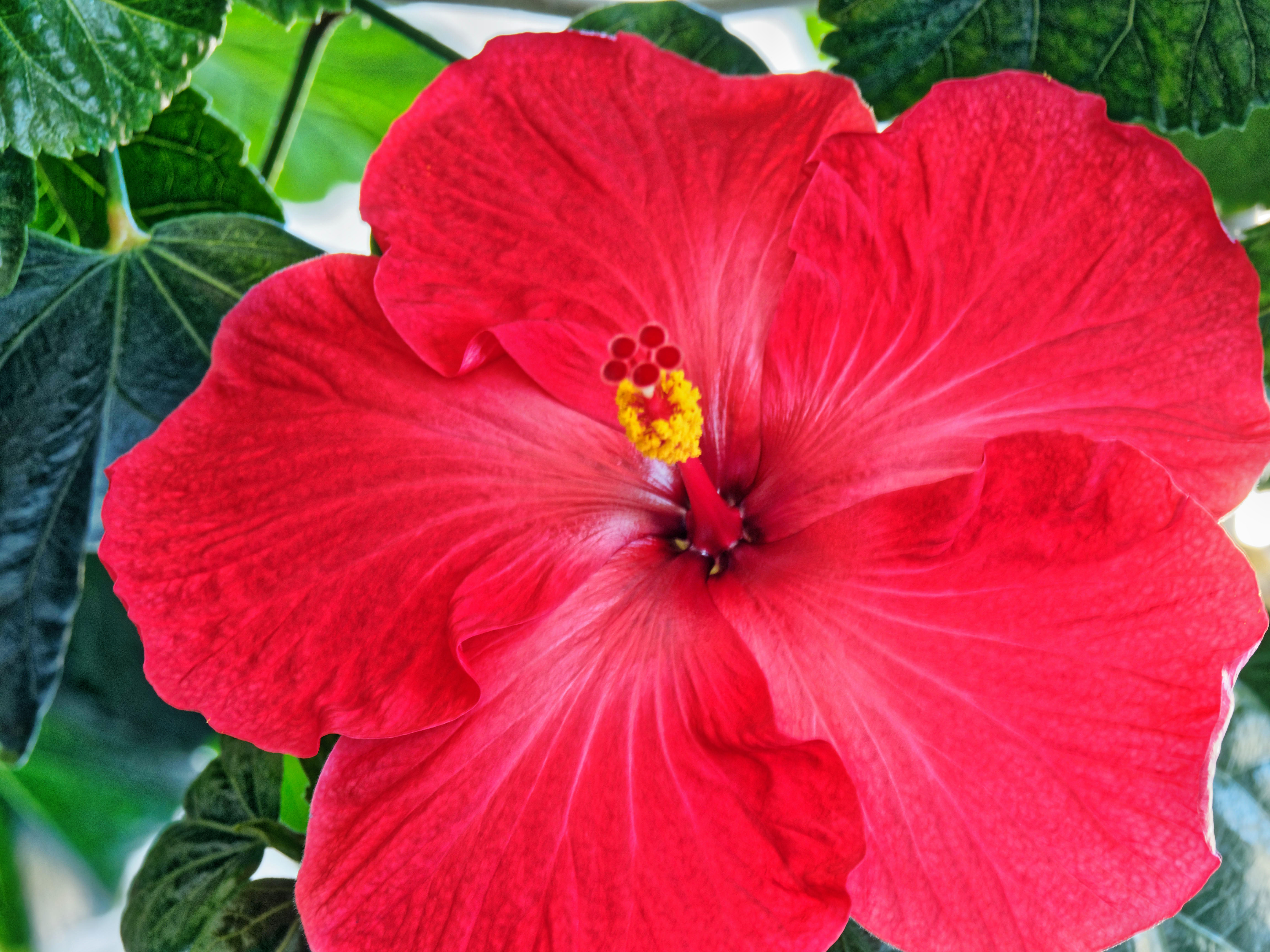 This should be Hibiscus-29.jpeg.  Is it missing?