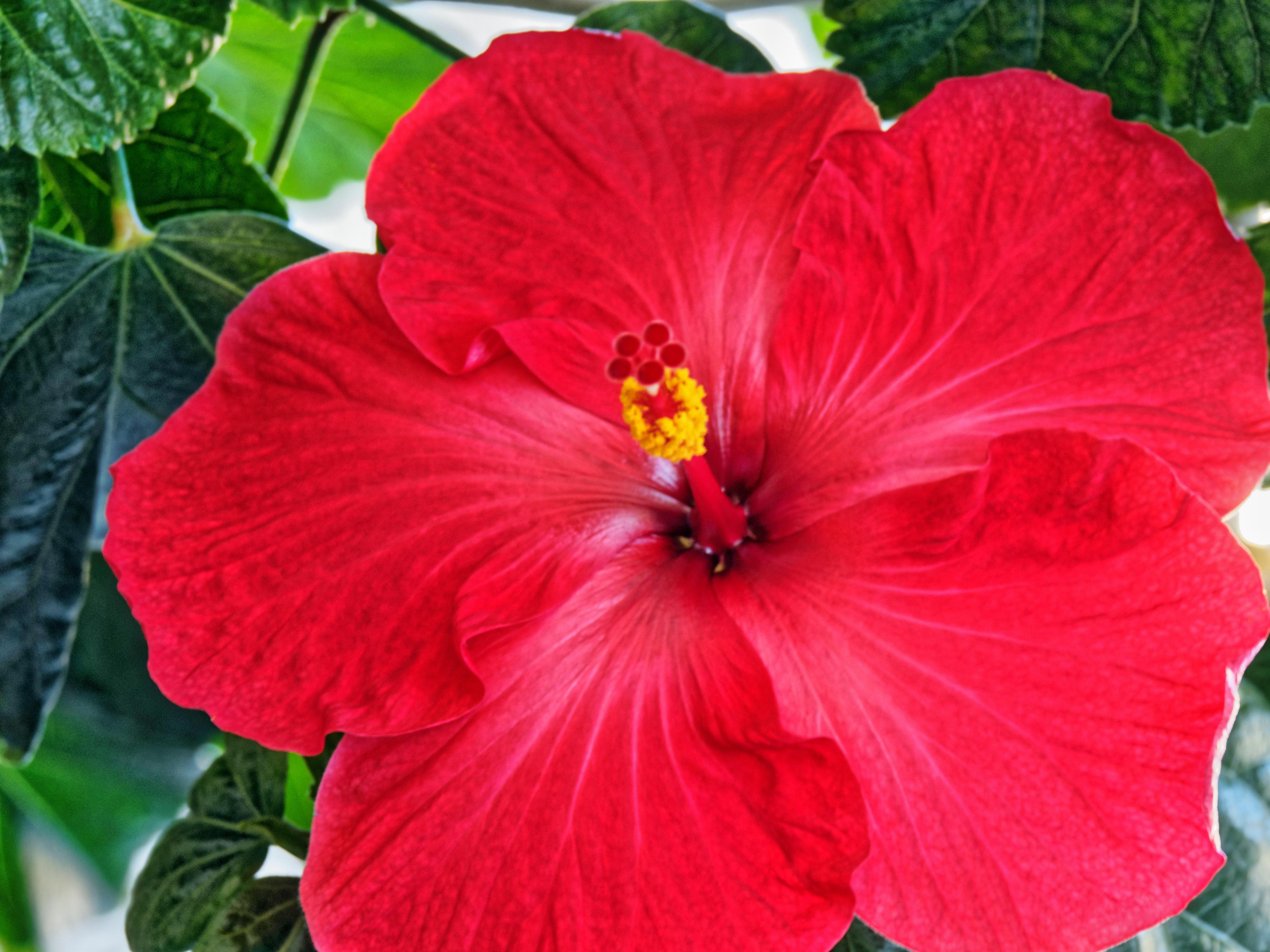 Hibiscus-30.jpeg