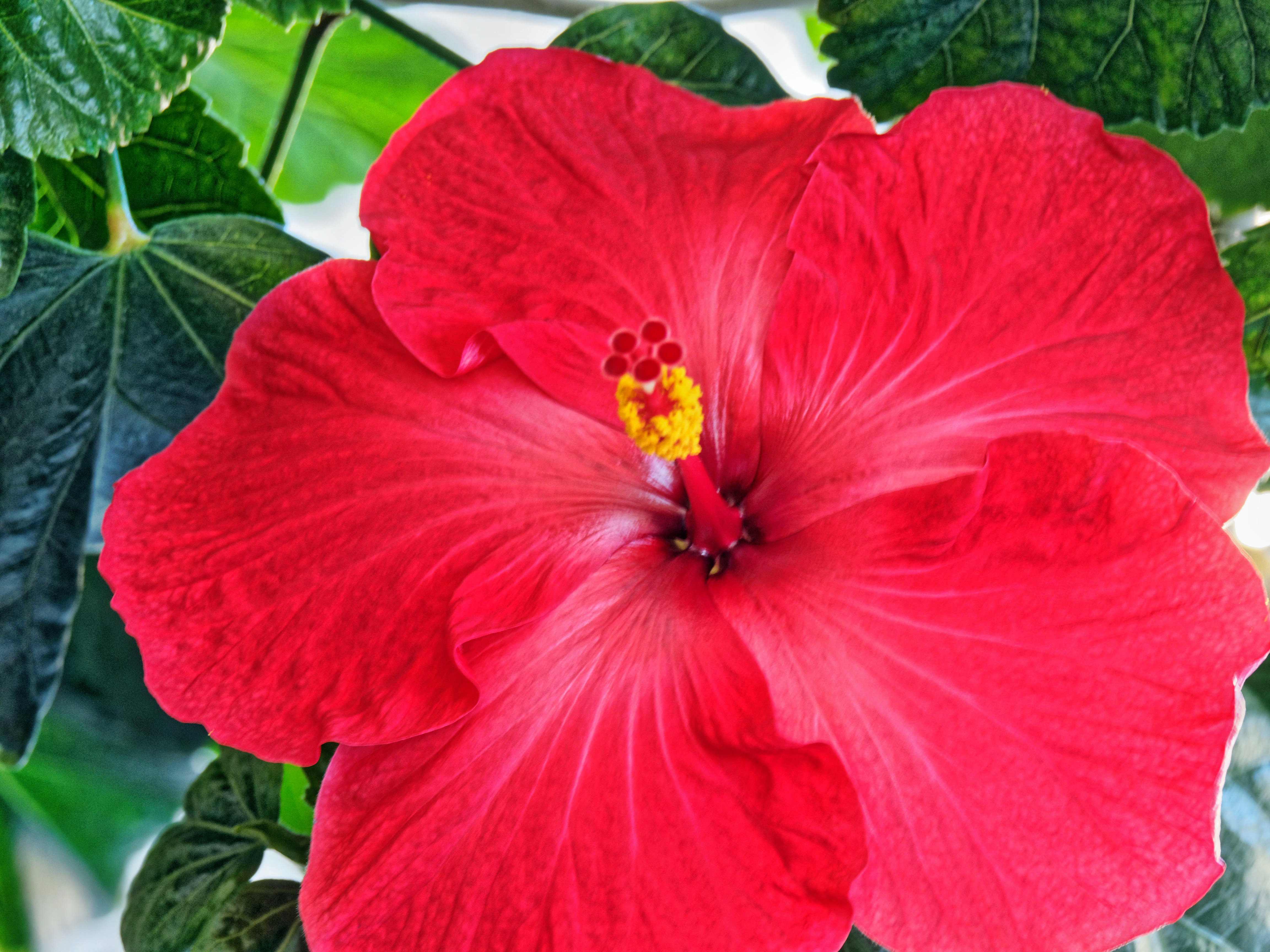 This should be Hibiscus-31.jpeg.  Is it missing?