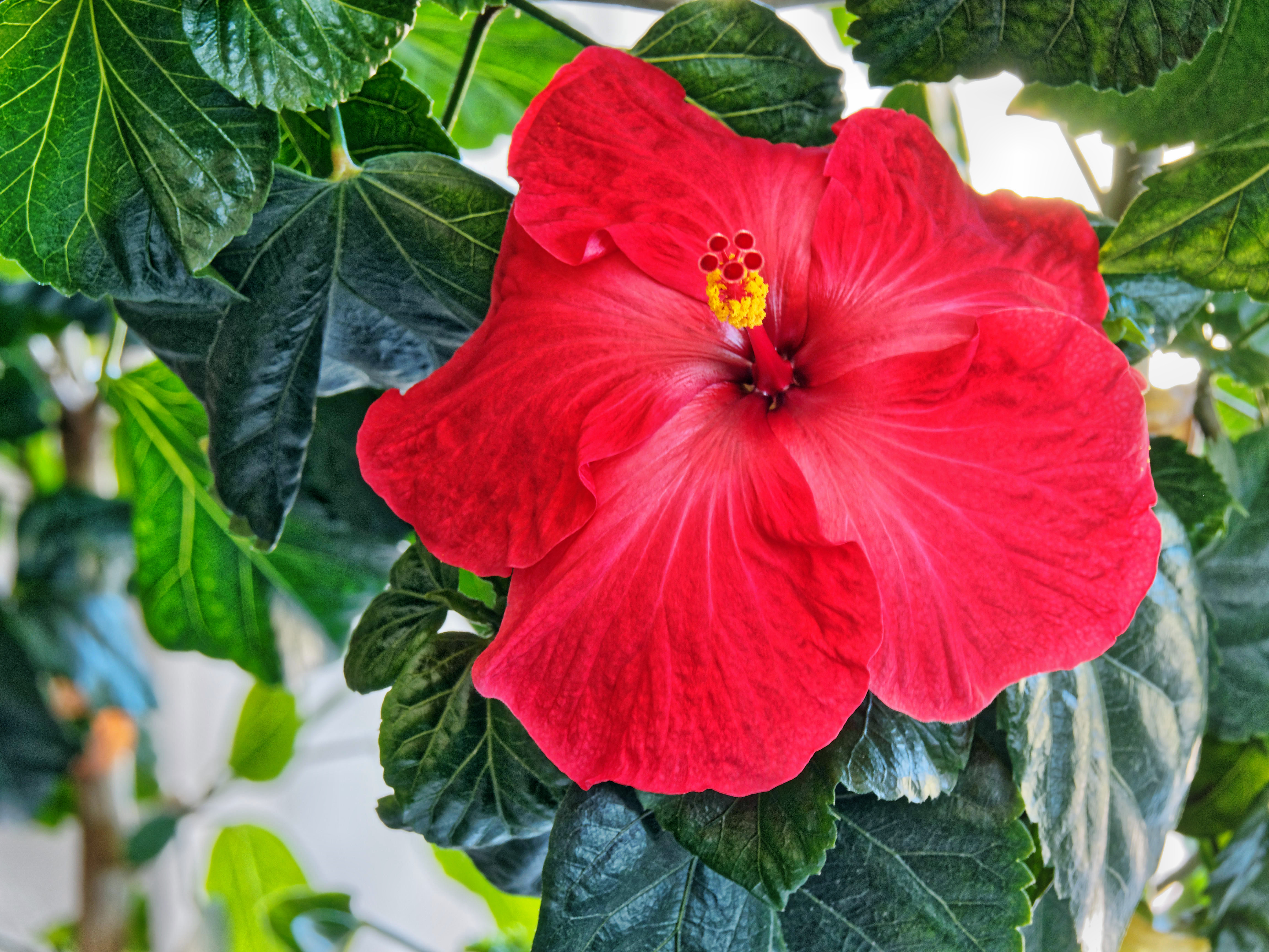 This should be Hibiscus-45.jpeg.  Is it missing?