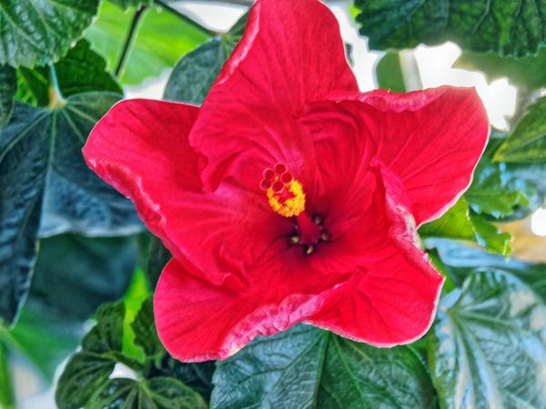 Hibiscus-17.jpeg