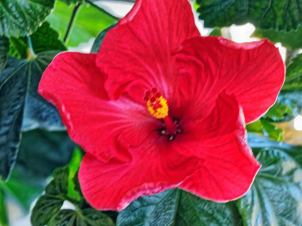 Hibiscus-21.jpeg