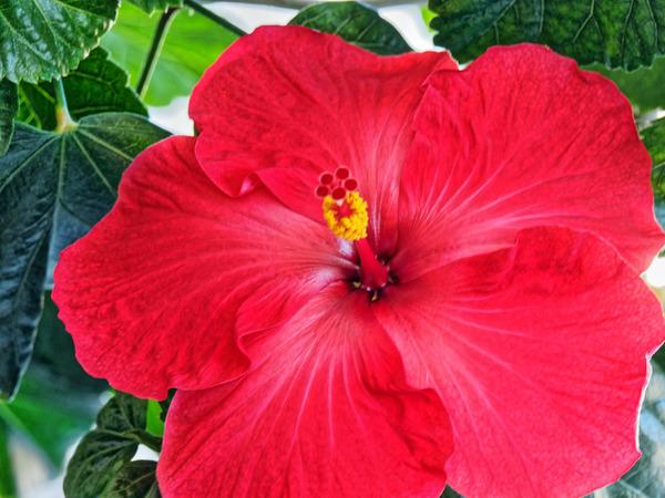 Hibiscus-31.jpeg