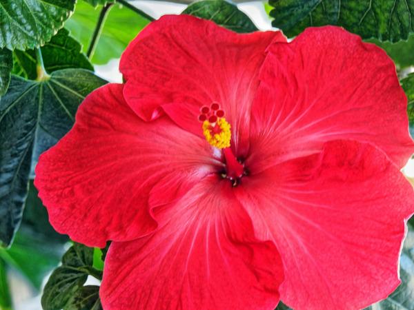 Hibiscus-32.jpeg