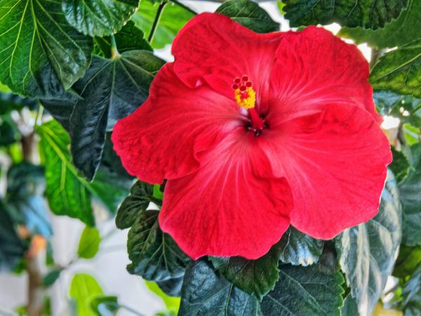 Hibiscus-38.jpeg