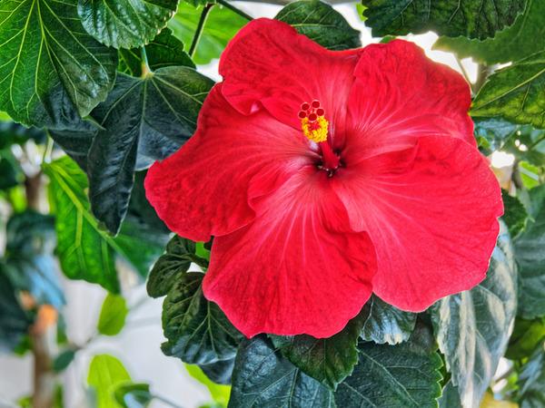 Hibiscus-39.jpeg