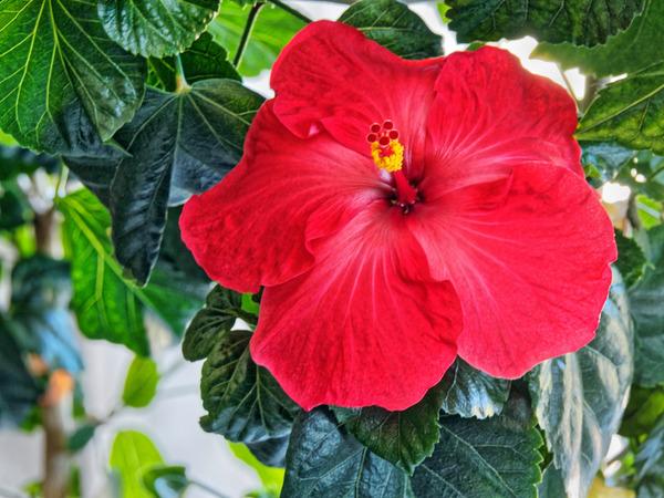 Hibiscus-40.jpeg