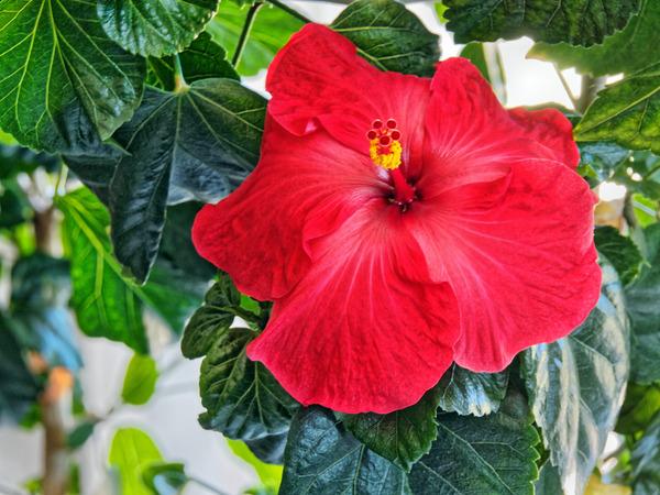 Hibiscus-50.jpeg