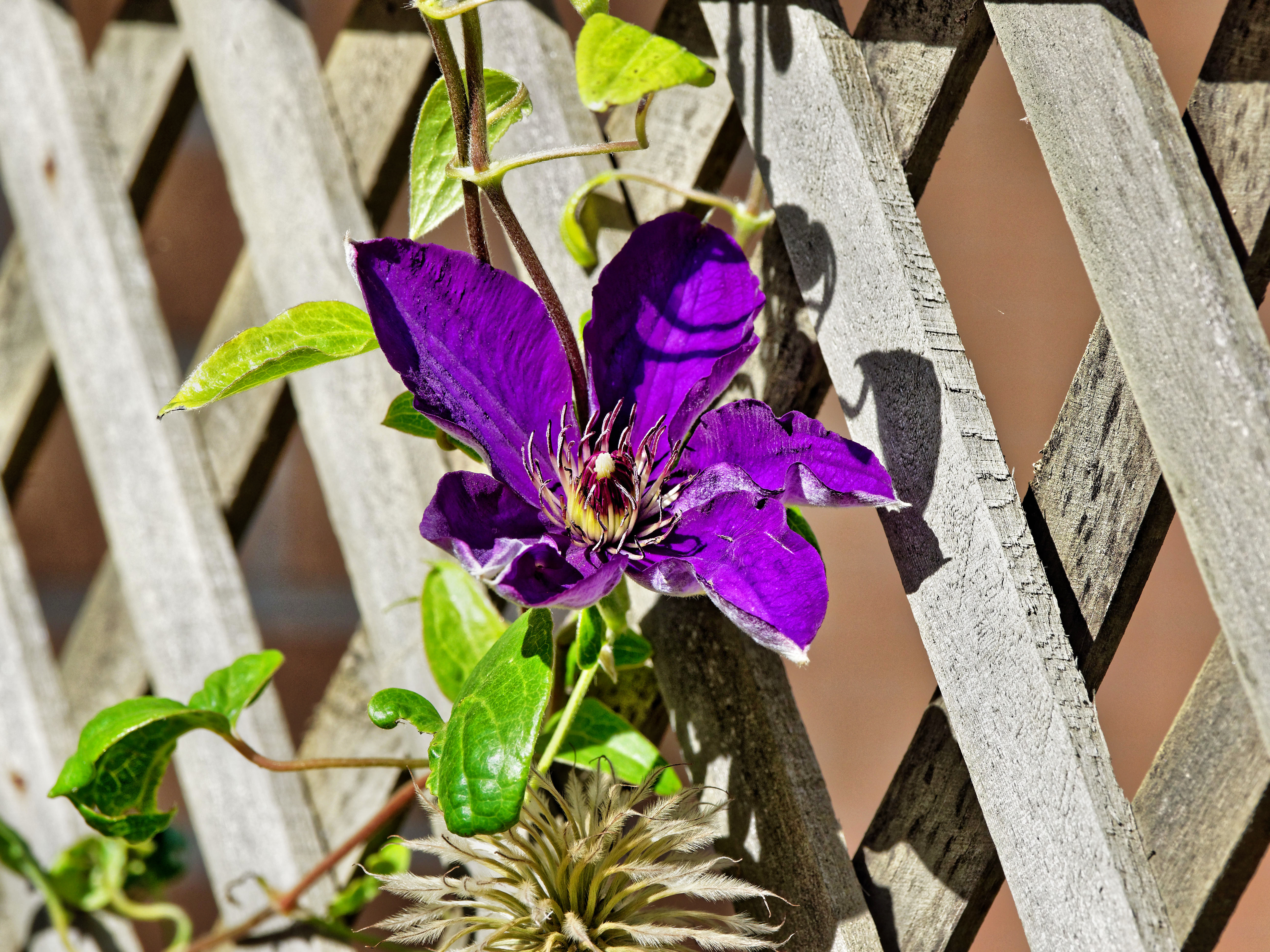 This should be Clematis.jpeg.  Is it missing?