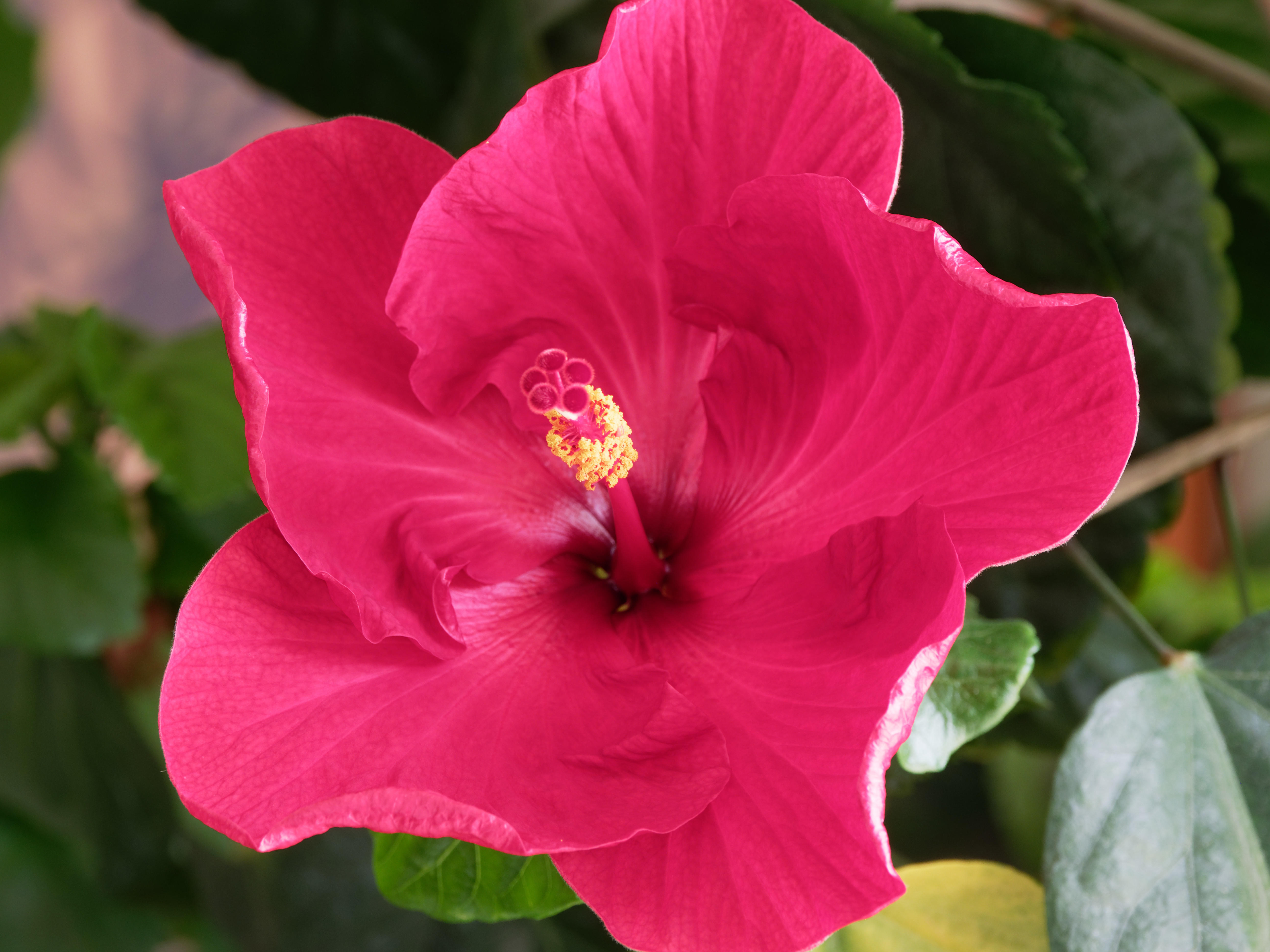 This should be Hibiscus-36.jpeg.  Is it missing?