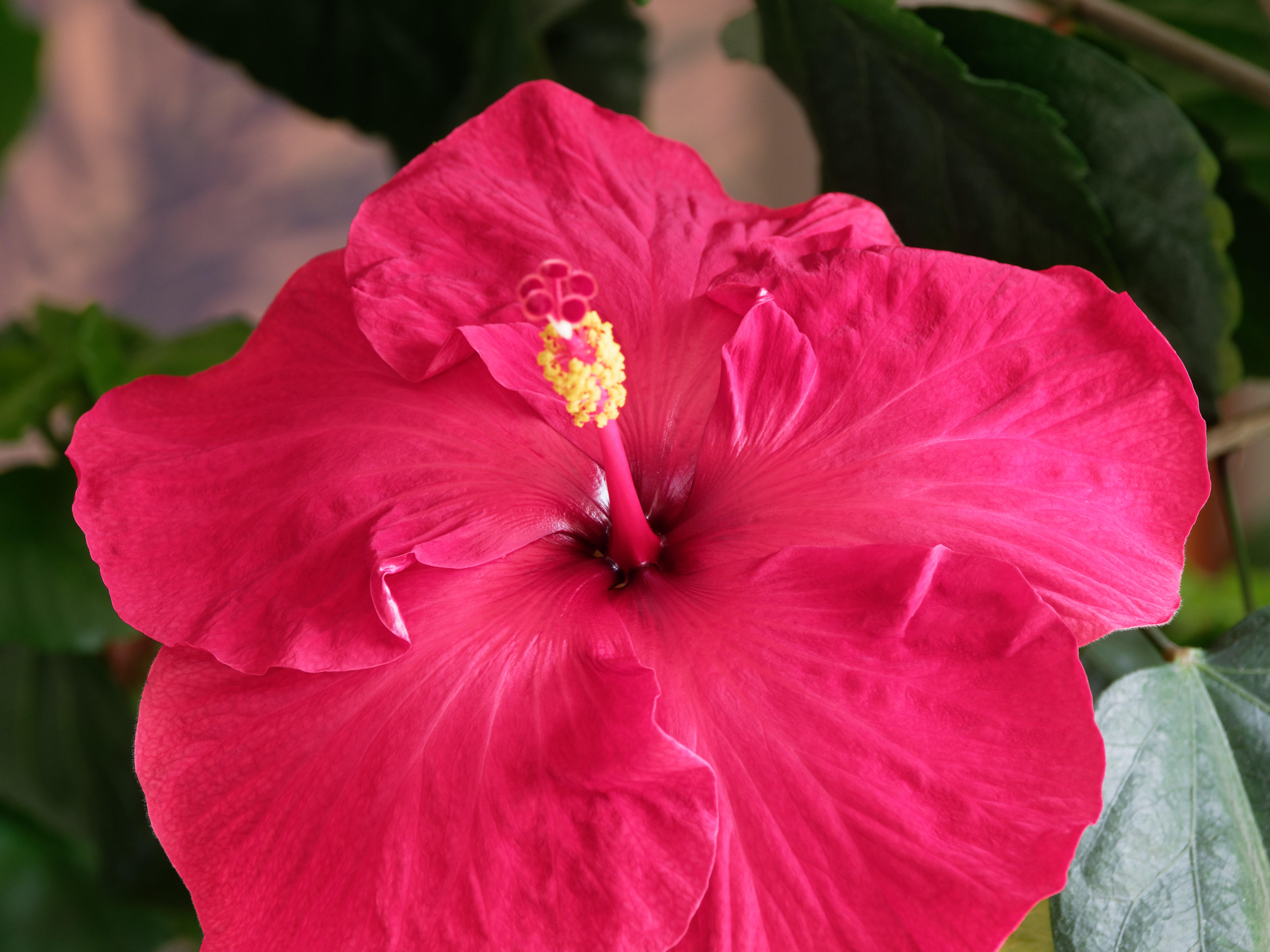 This should be Hibiscus-51.jpeg.  Is it missing?