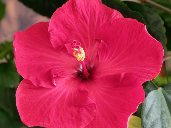 Hibiscus-46.jpeg