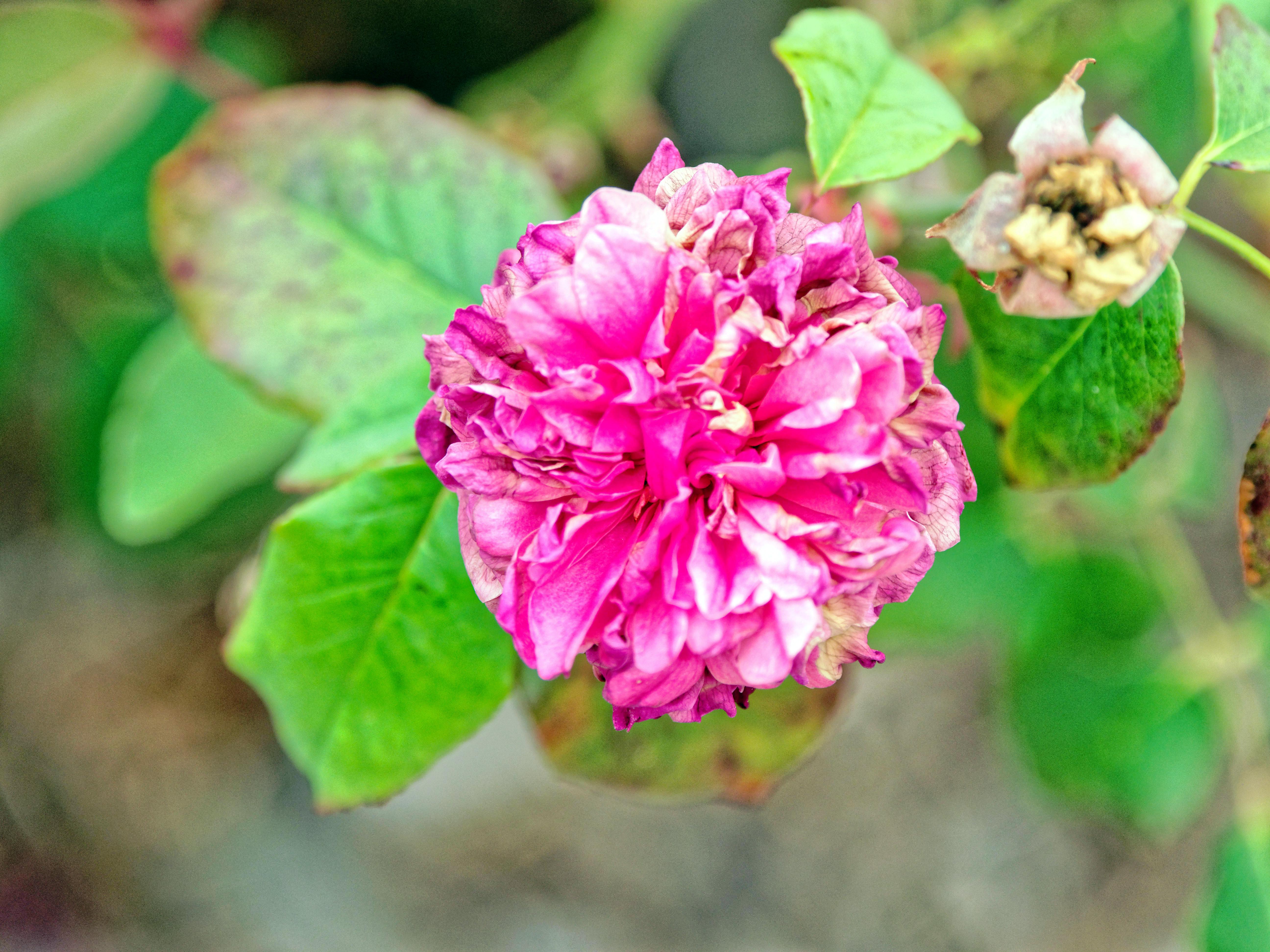 Roses-19.jpeg