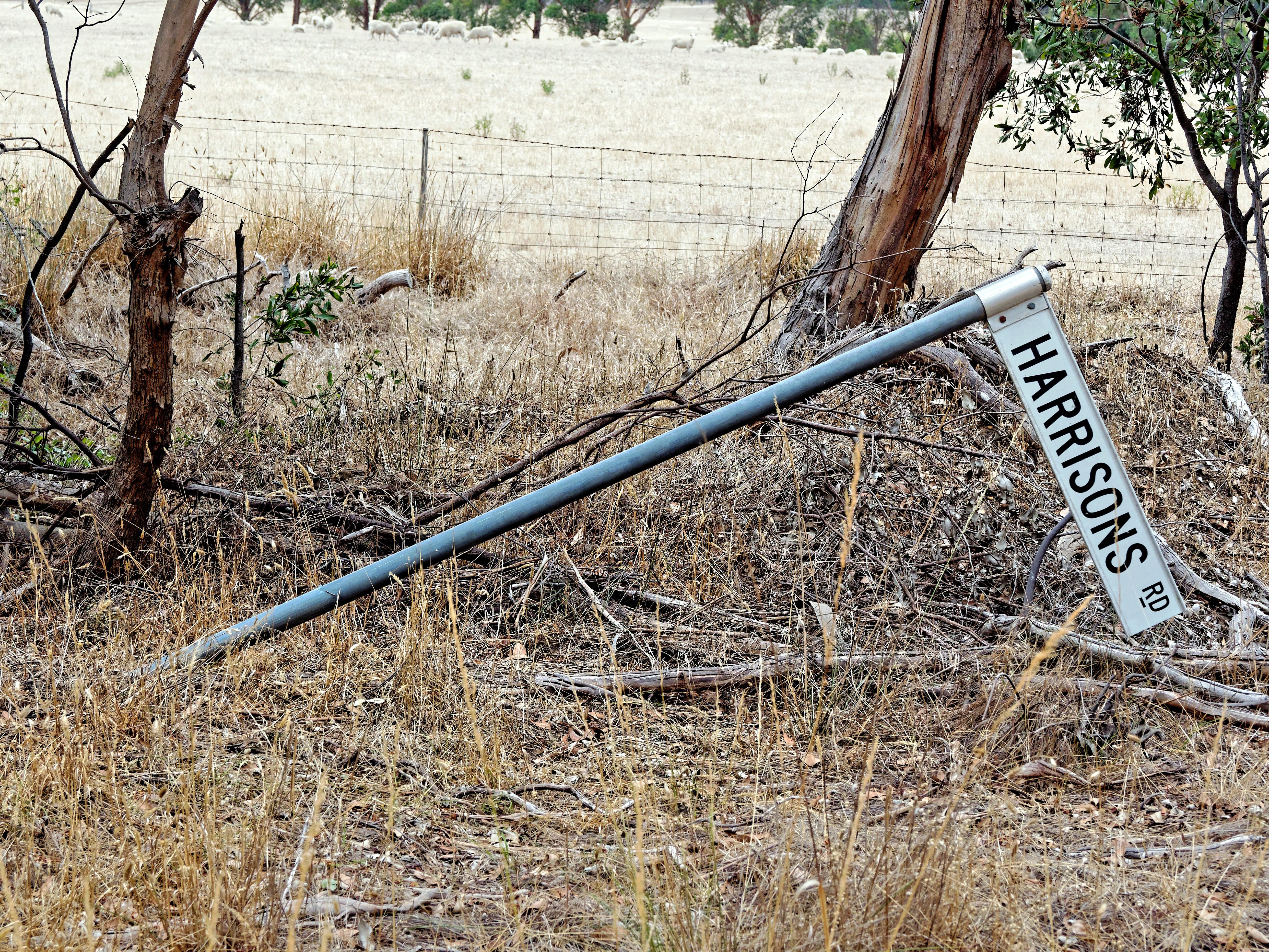 Road-sign.jpeg