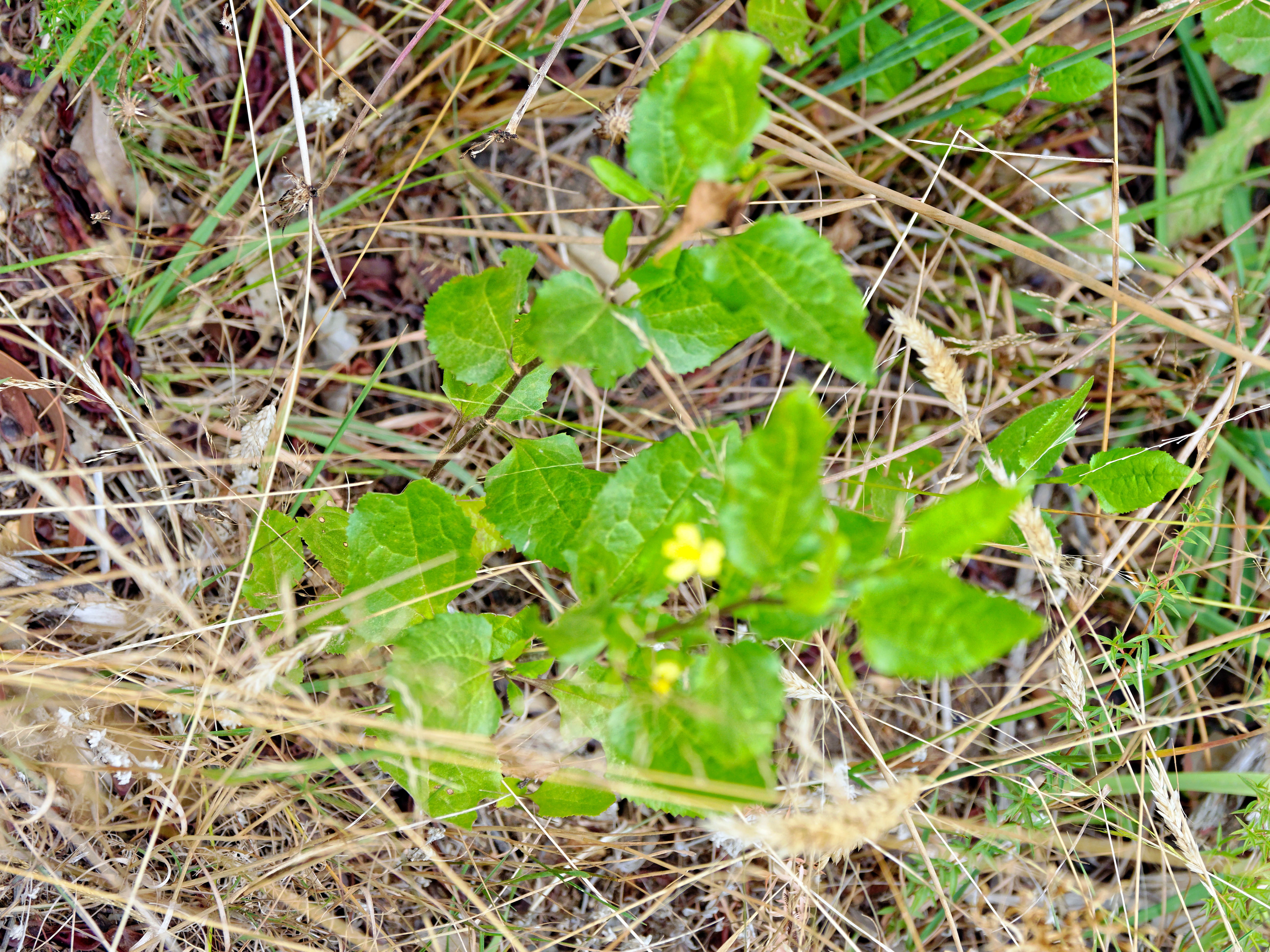 This should be Wildflower-2.jpeg.  Is it missing?