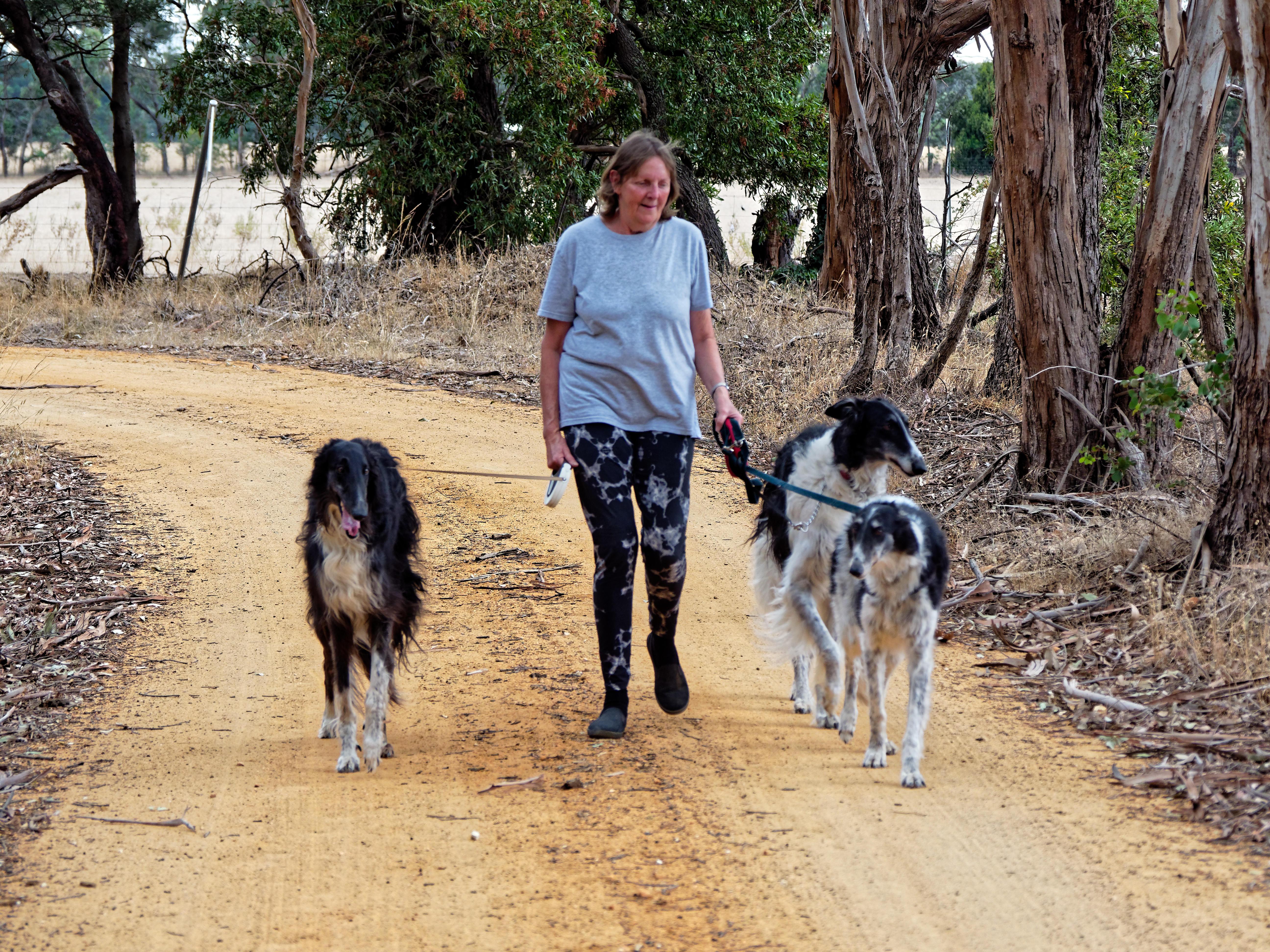 Walking-dogs-101.jpeg