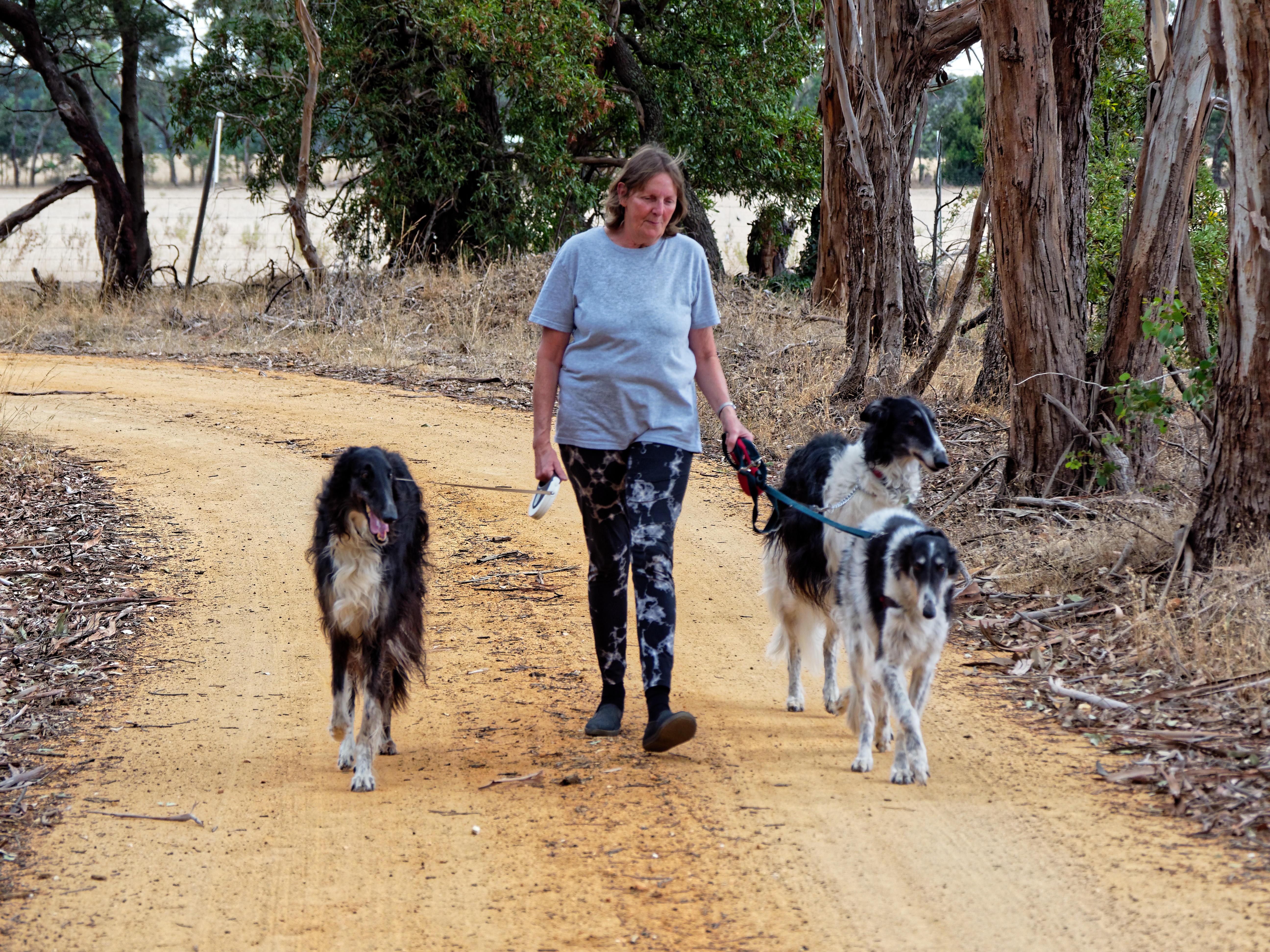 Walking-dogs-104.jpeg