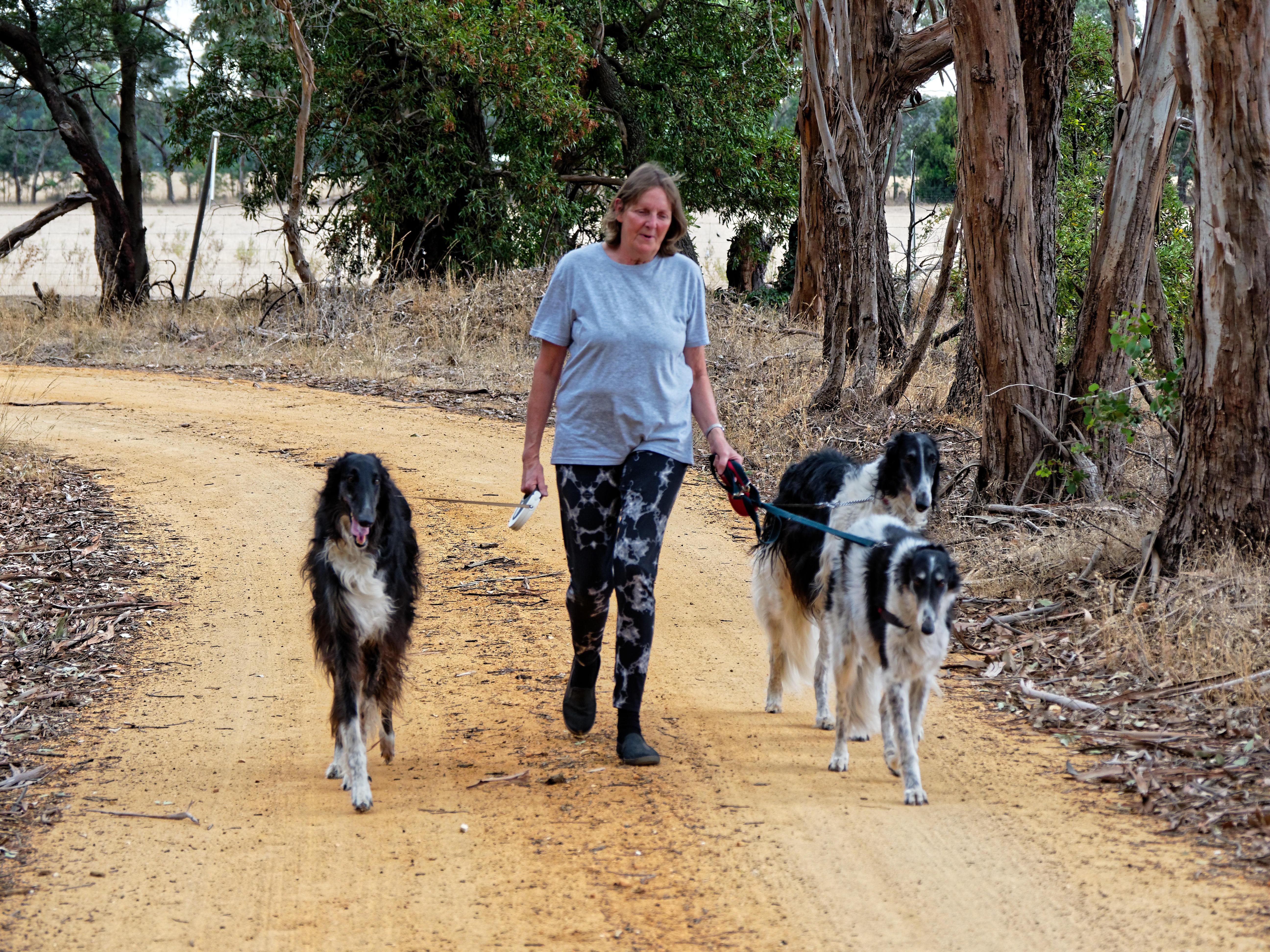 Walking-dogs-106.jpeg