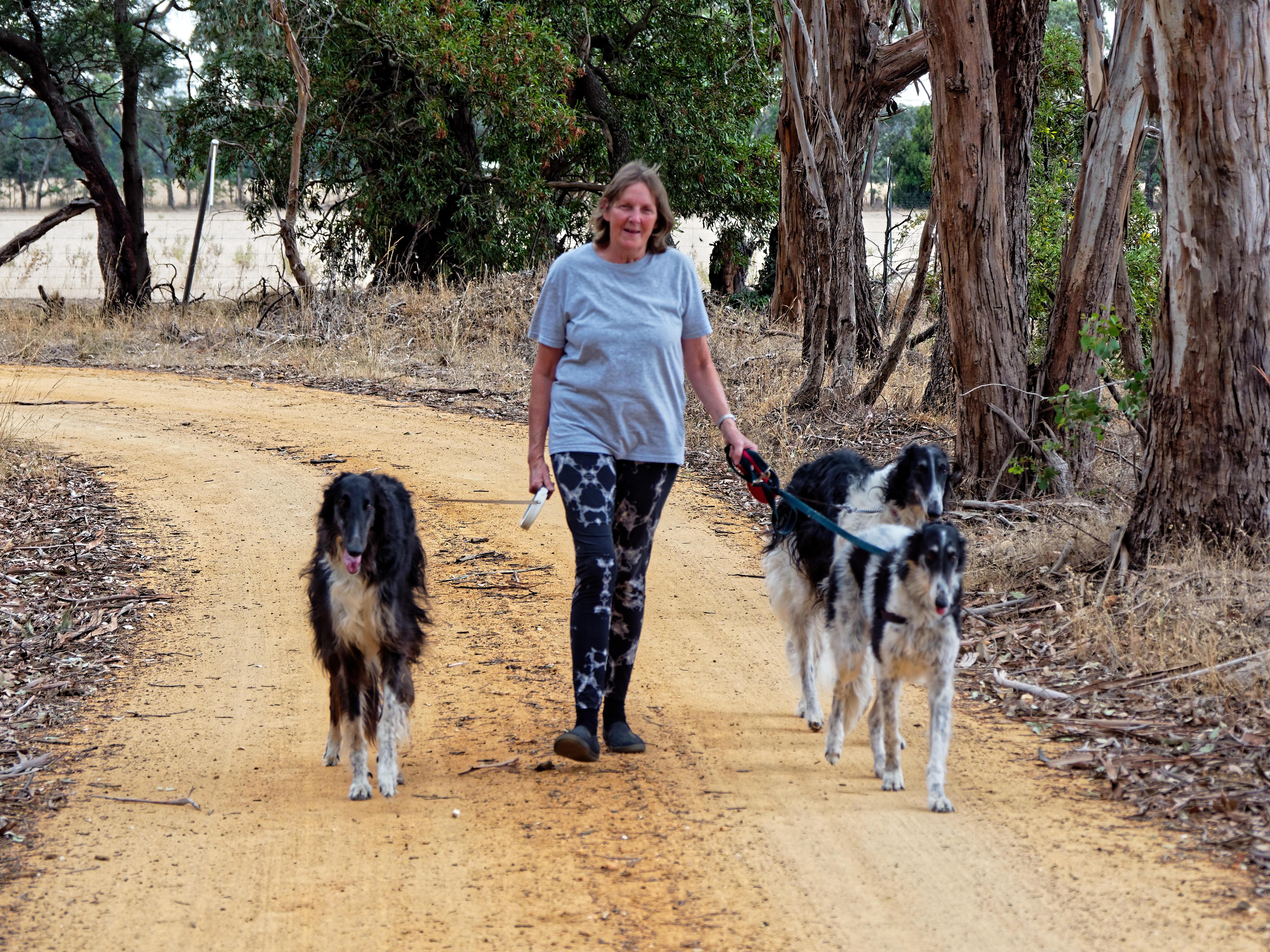 Walking-dogs-108.jpeg