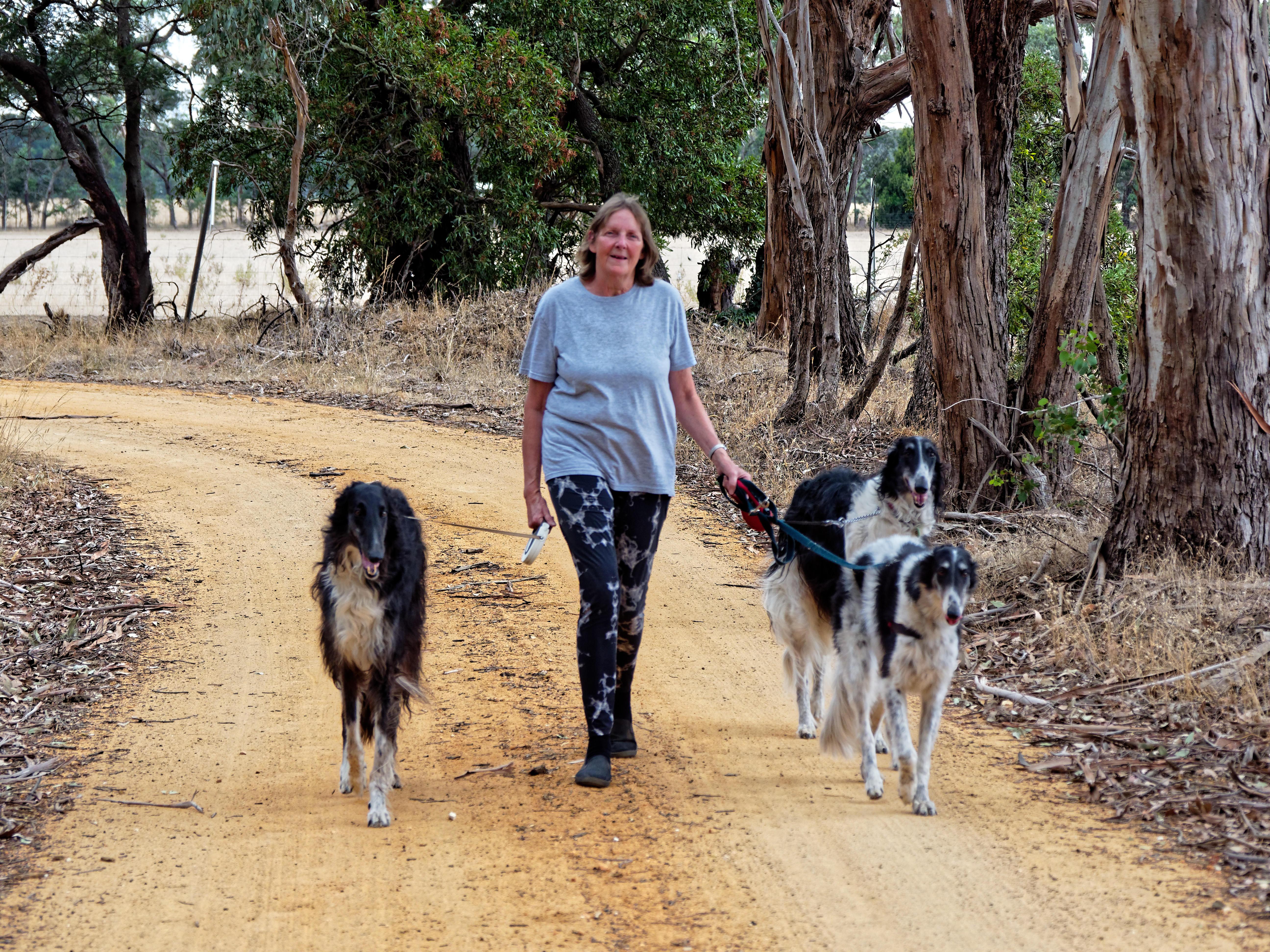 Walking-dogs-110.jpeg