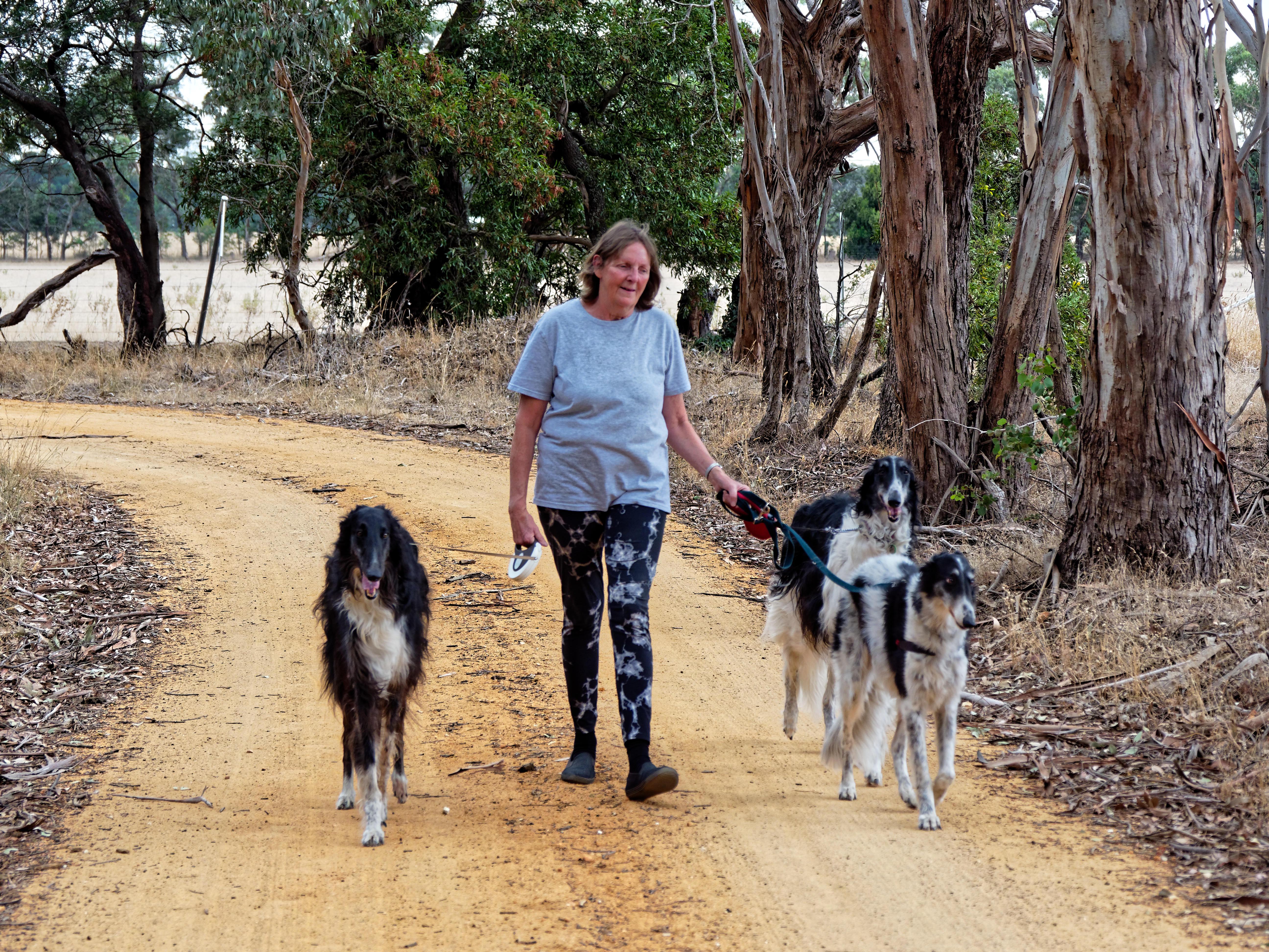 Walking-dogs-114.jpeg