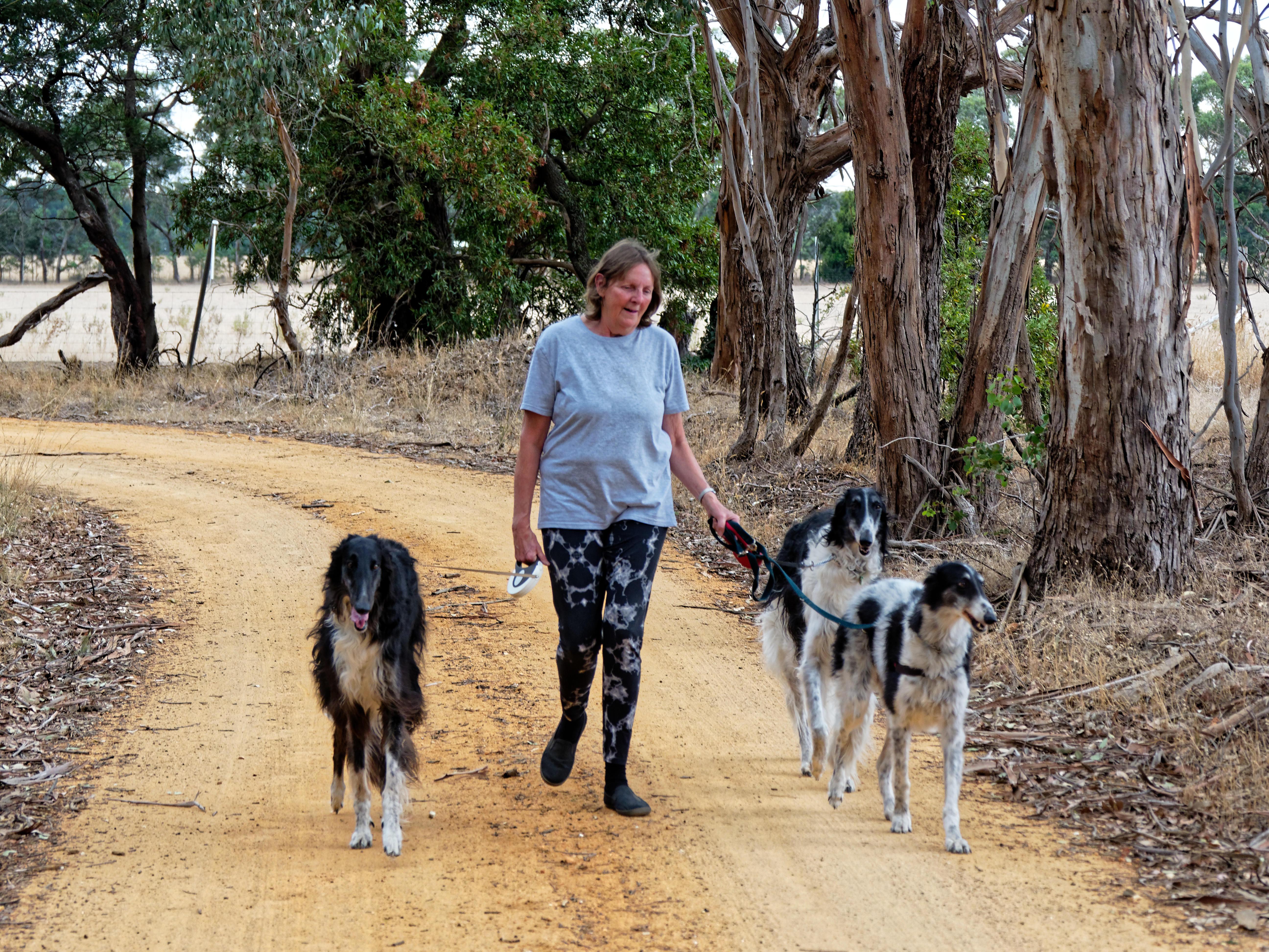 Walking-dogs-117.jpeg