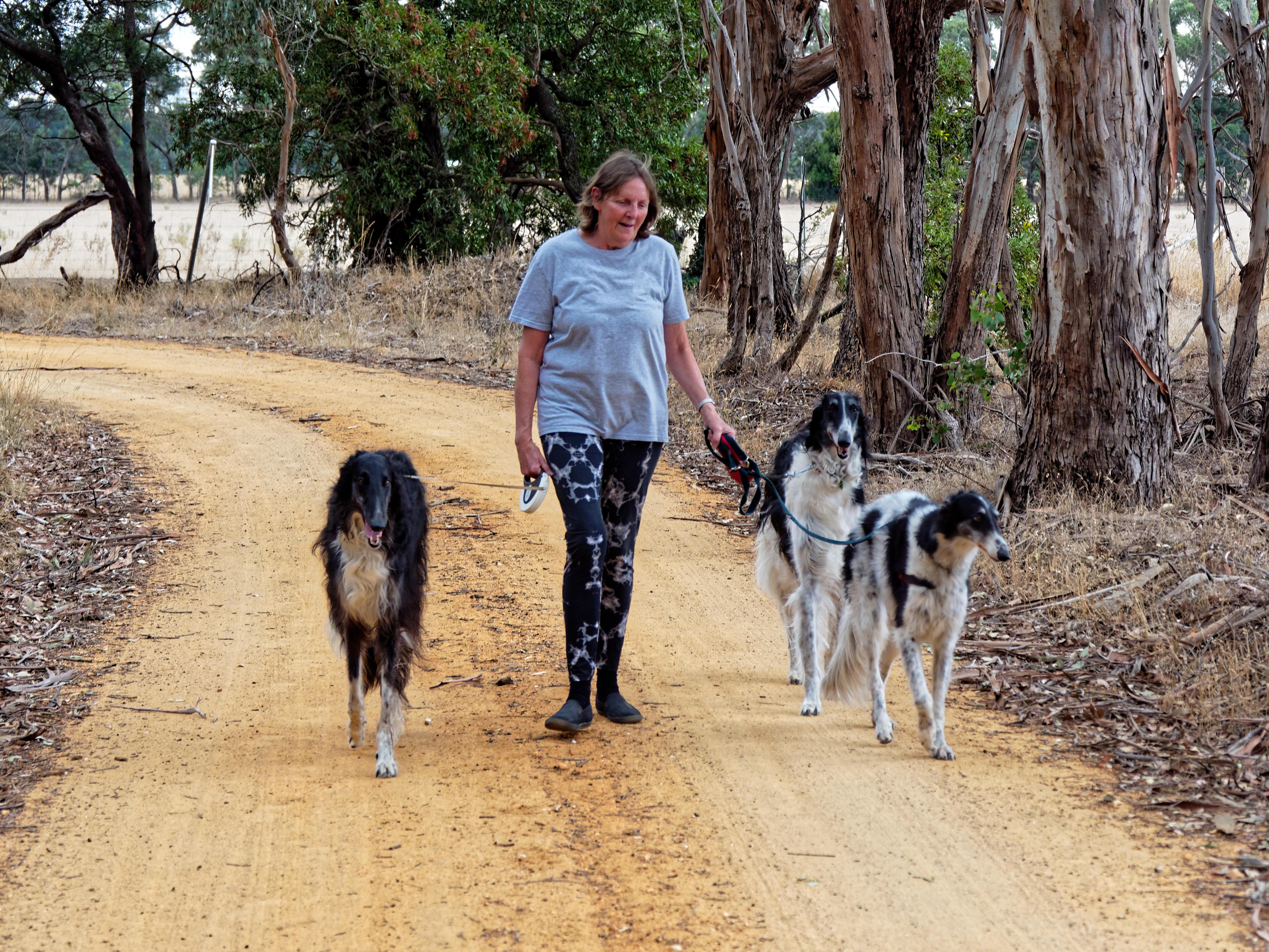 Walking-dogs-118.jpeg
