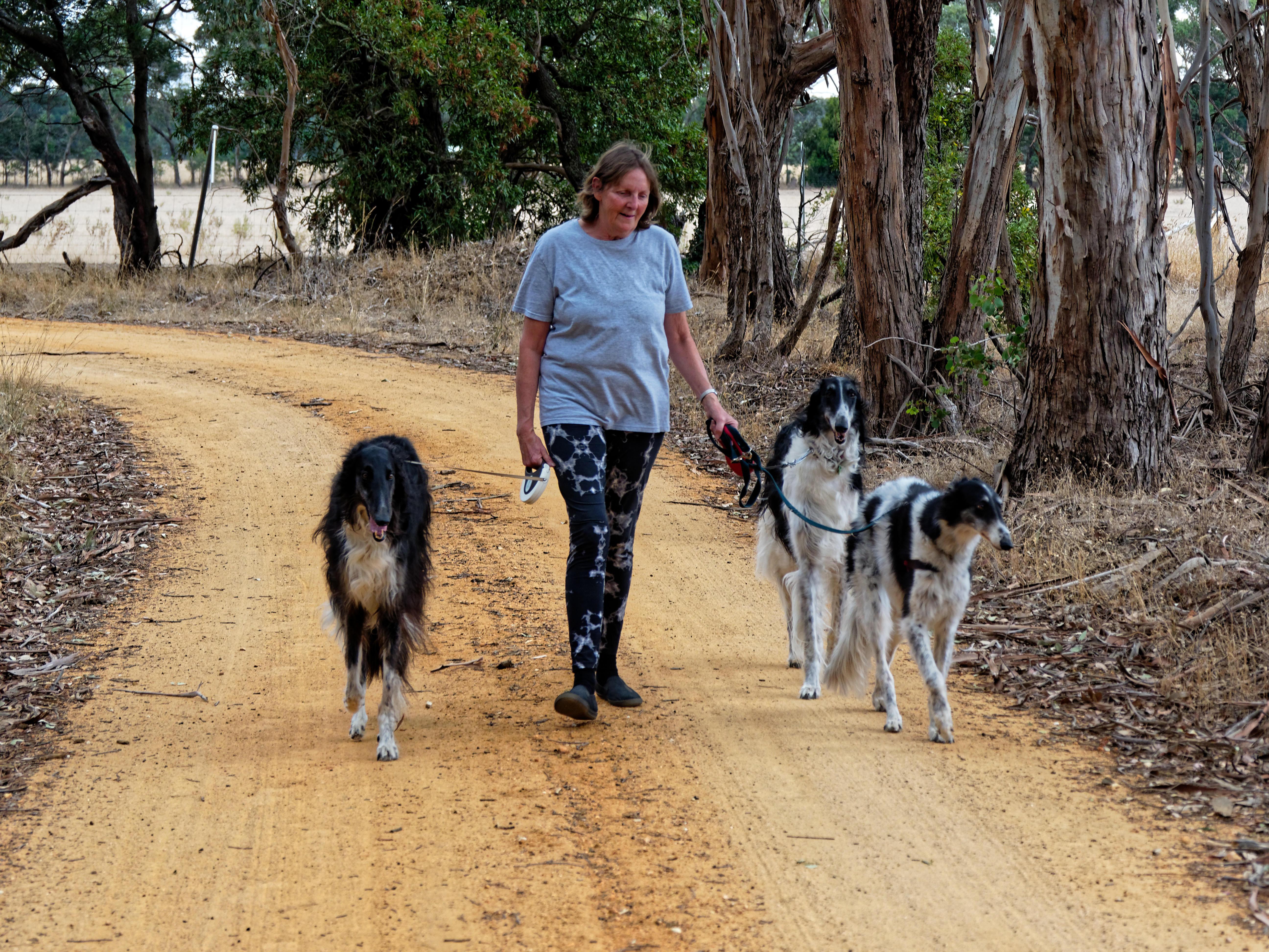 Walking-dogs-119.jpeg