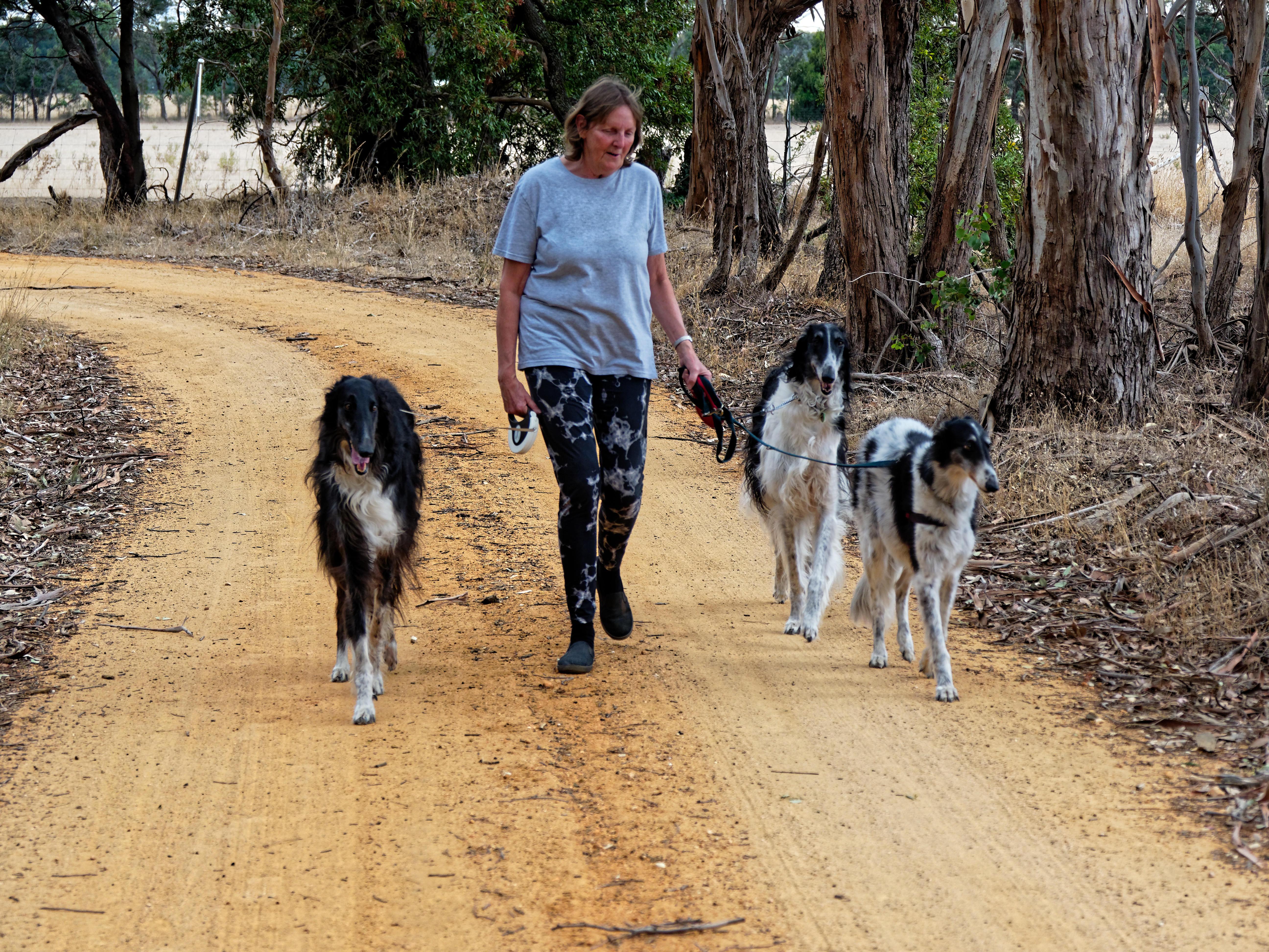 Walking-dogs-121.jpeg