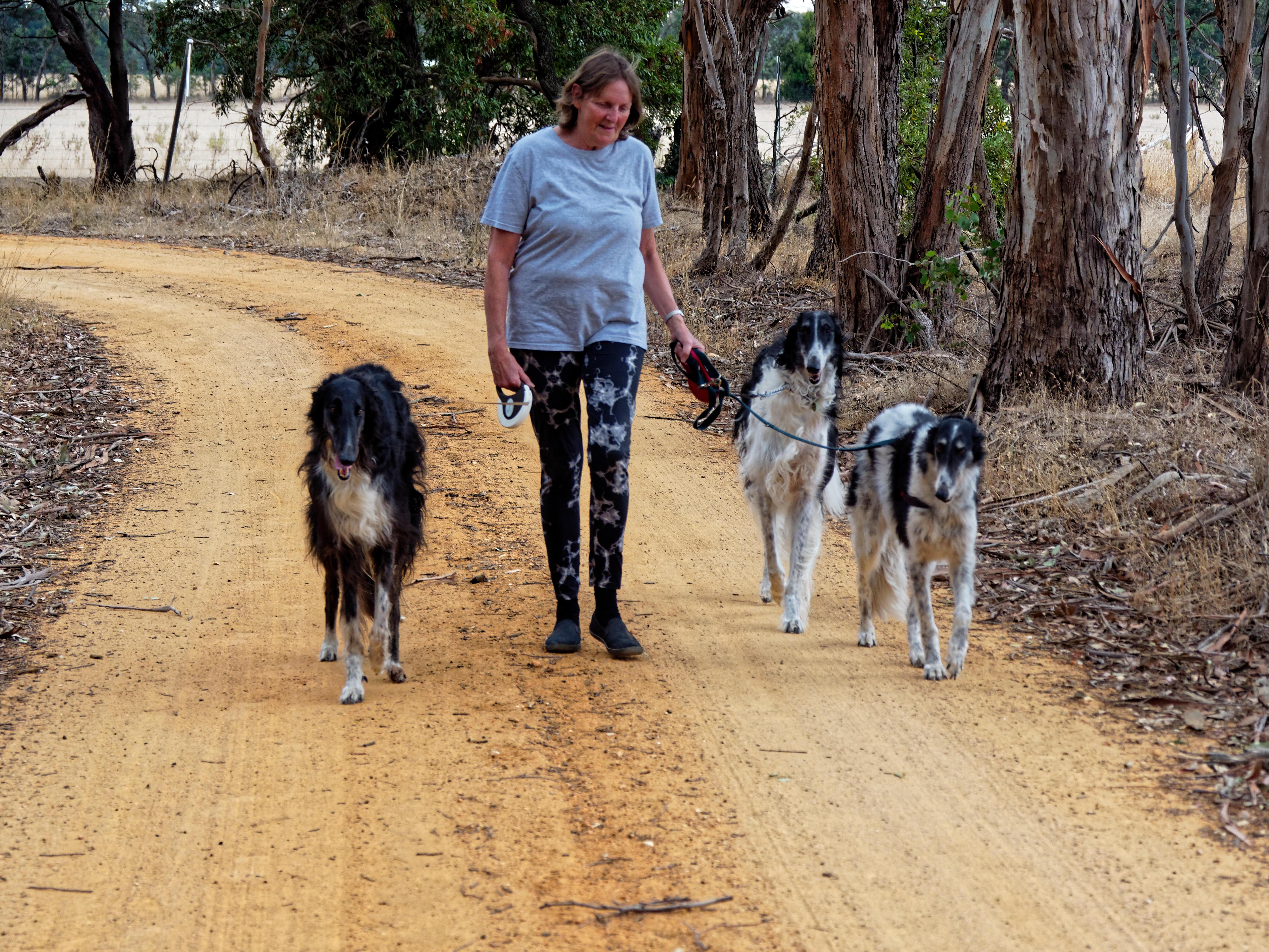 Walking-dogs-122.jpeg