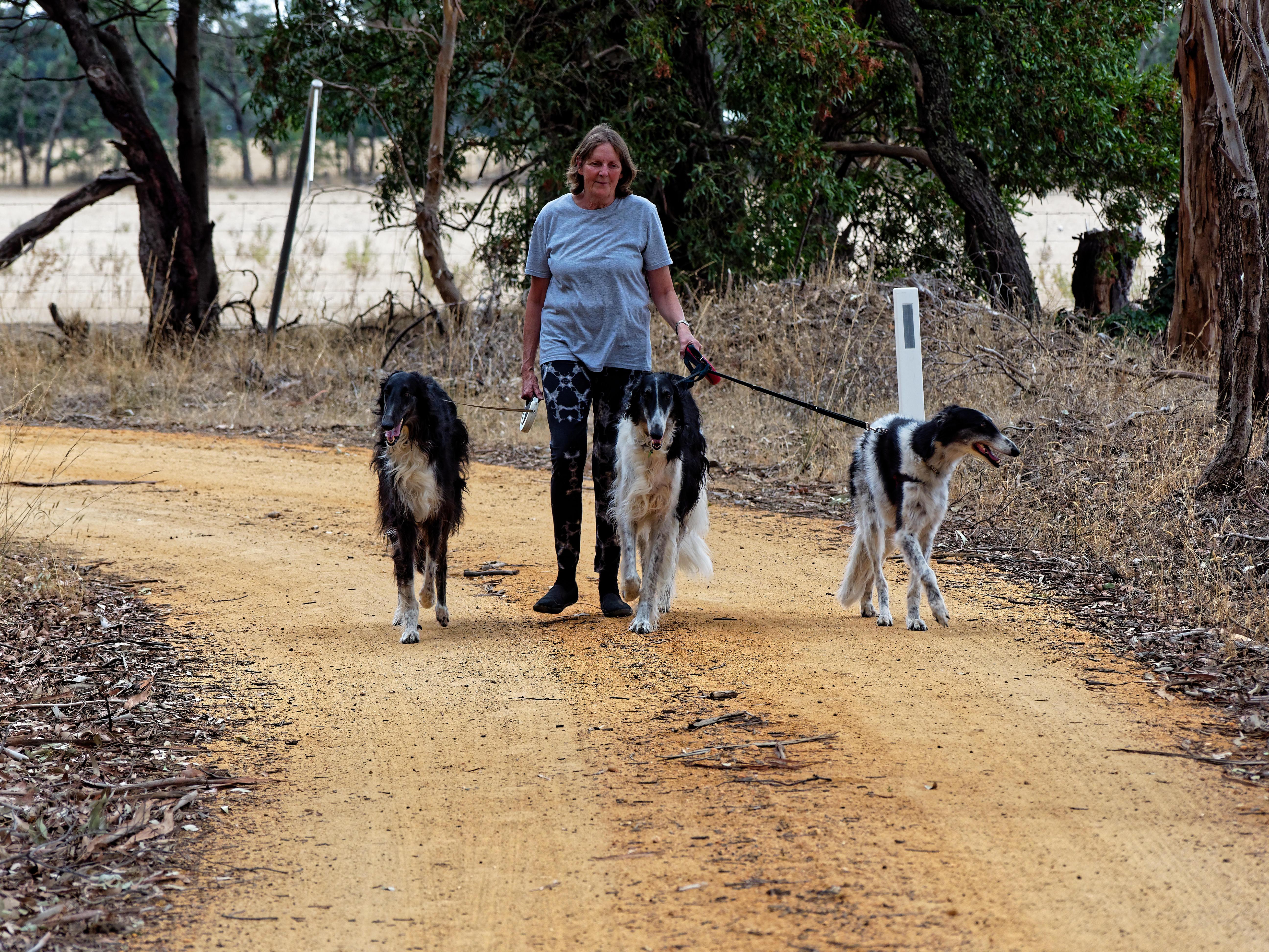 Walking-dogs-16.jpeg