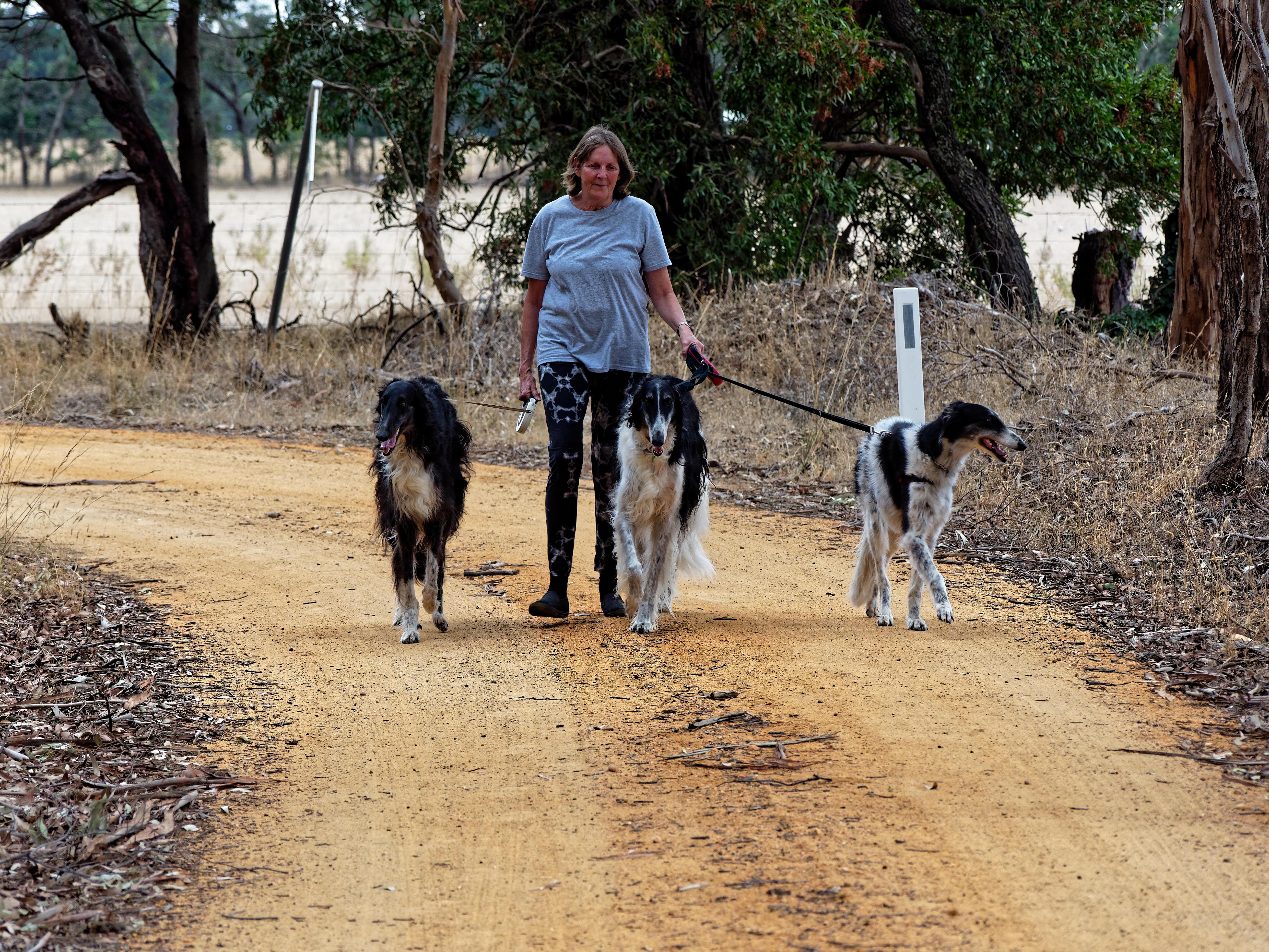 Walking-dogs-19.jpeg