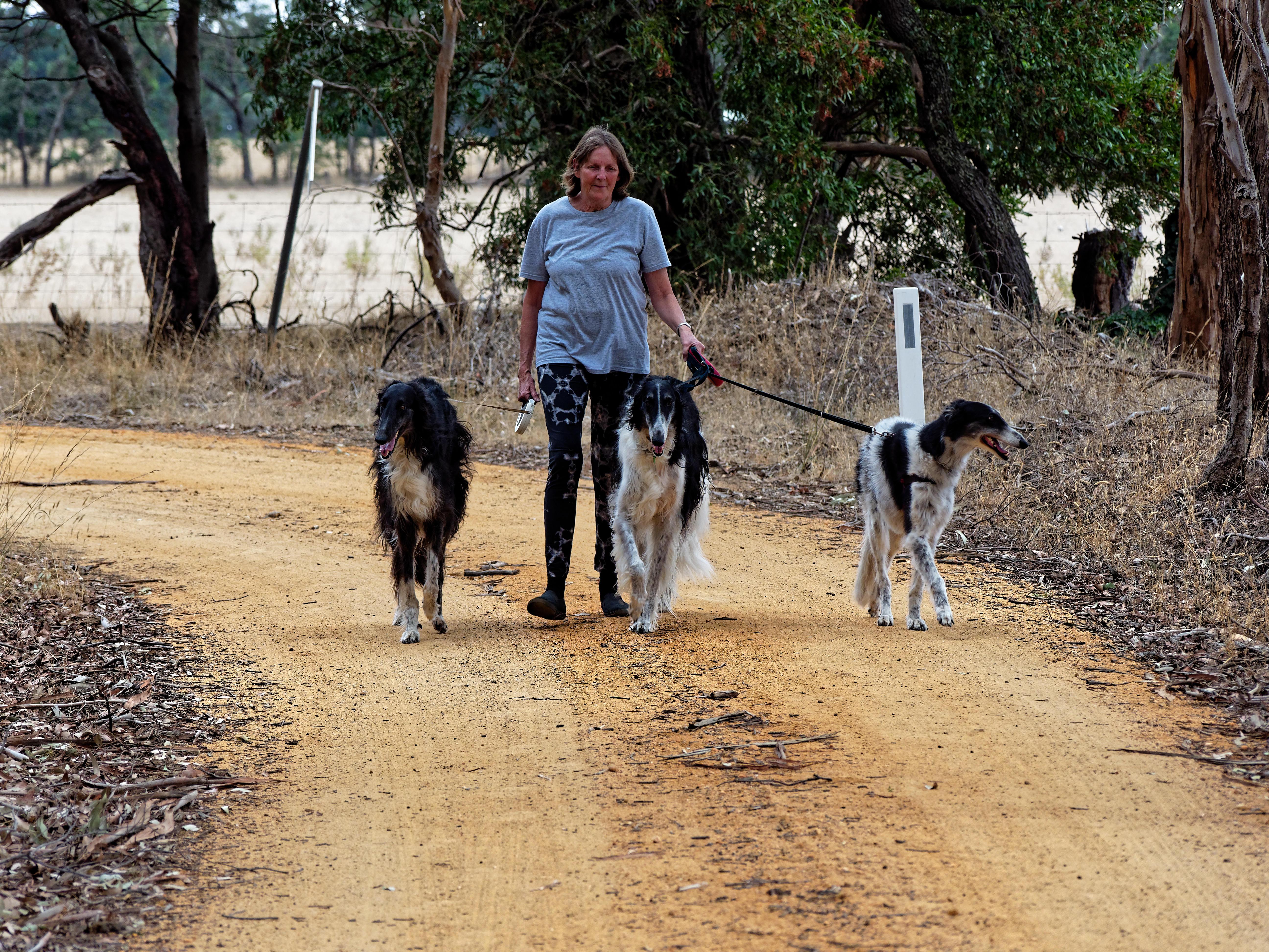 Walking-dogs-20.jpeg