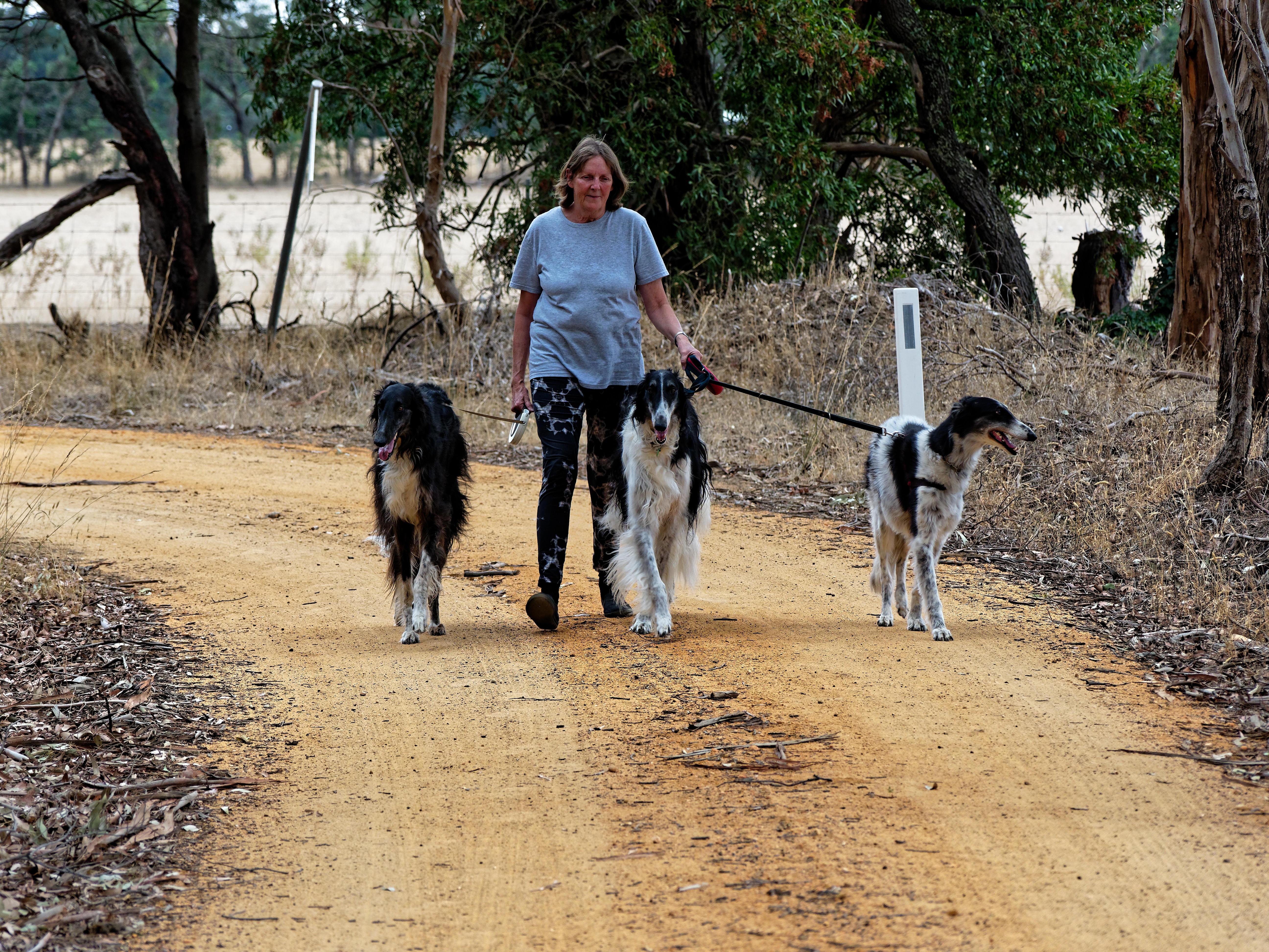 Walking-dogs-26.jpeg