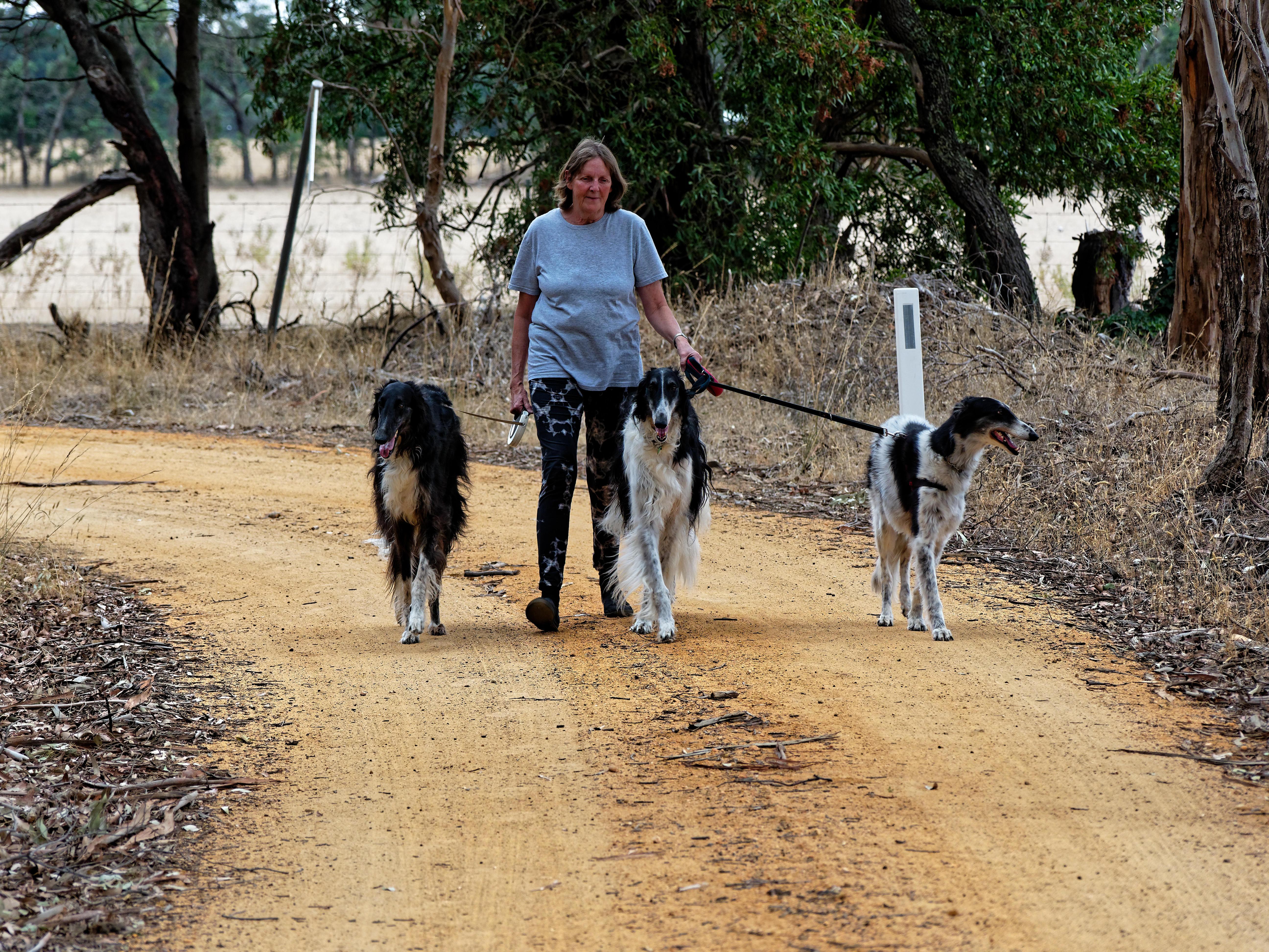 Walking-dogs-27.jpeg